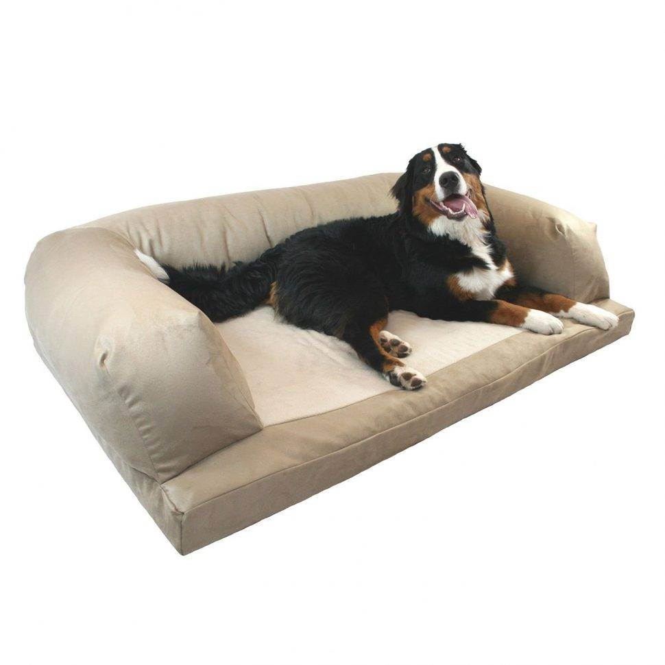 Sofas Center : Aspen Pet Sofa For Dogs Cats Color Varies Chewy Com inside Sofas for Dogs (Image 15 of 30)