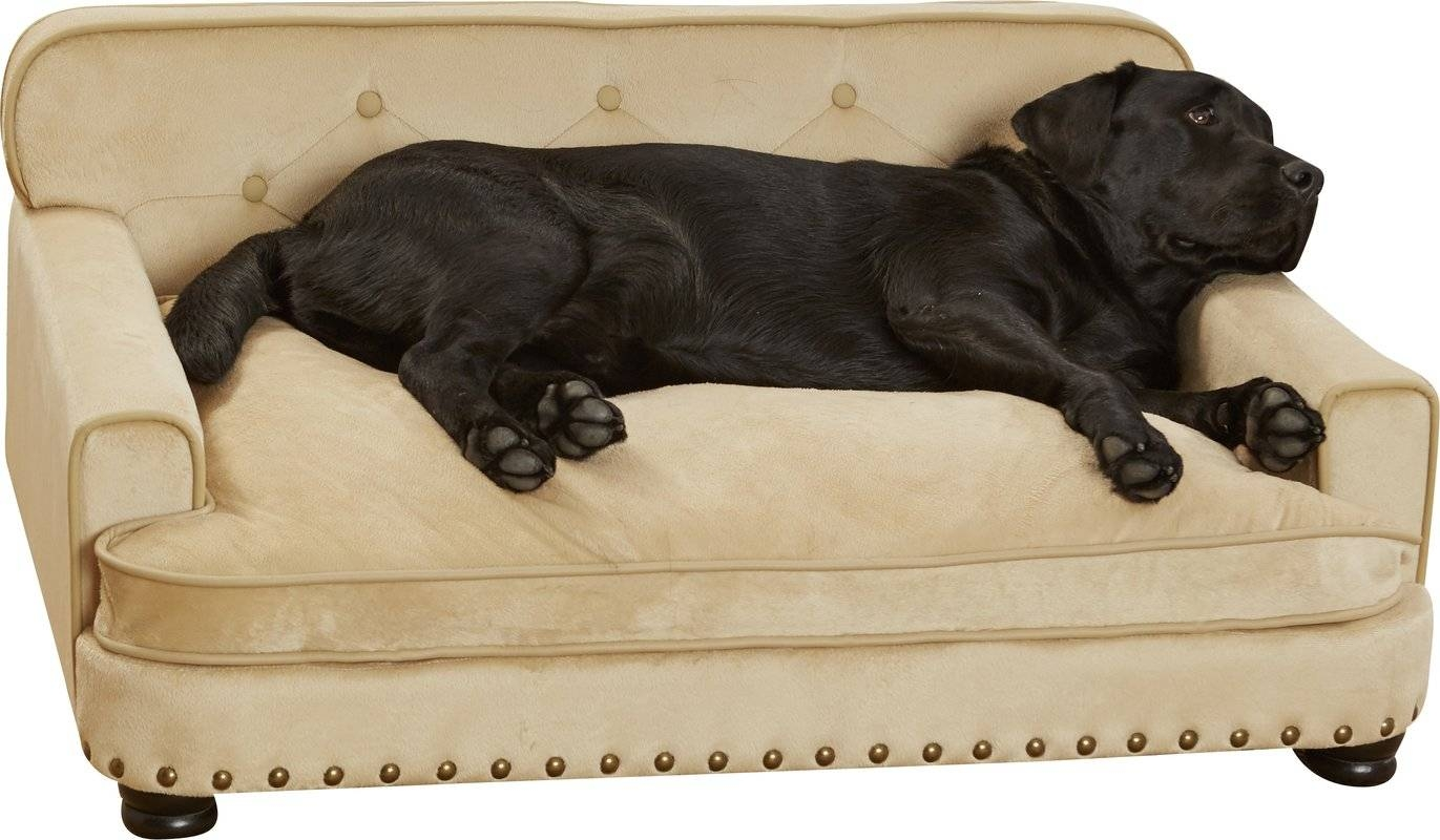 Enchanted Home Pet Library Dog Sofa & Reviews | Wayfair with Dog Sofas And Chairs (Image 6 of 15)