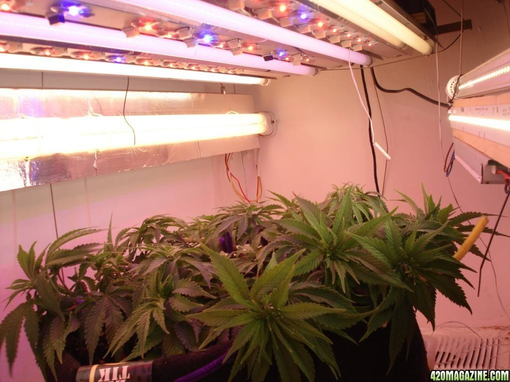 First Journal - Diy T5/led Light & Grow Box - Page 6 in Lights In The Box Lighting (Image 4 of 12)