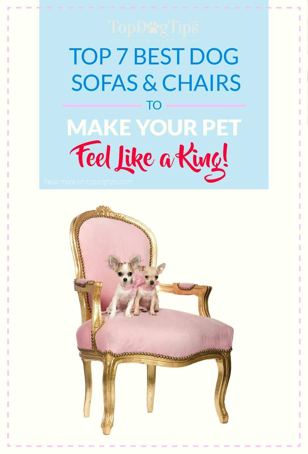 Top 7 Best Dog Sofas And Chairs For Stylish Home Decor In 2017 with regard to Dog Sofas And Chairs (Image 13 of 15)