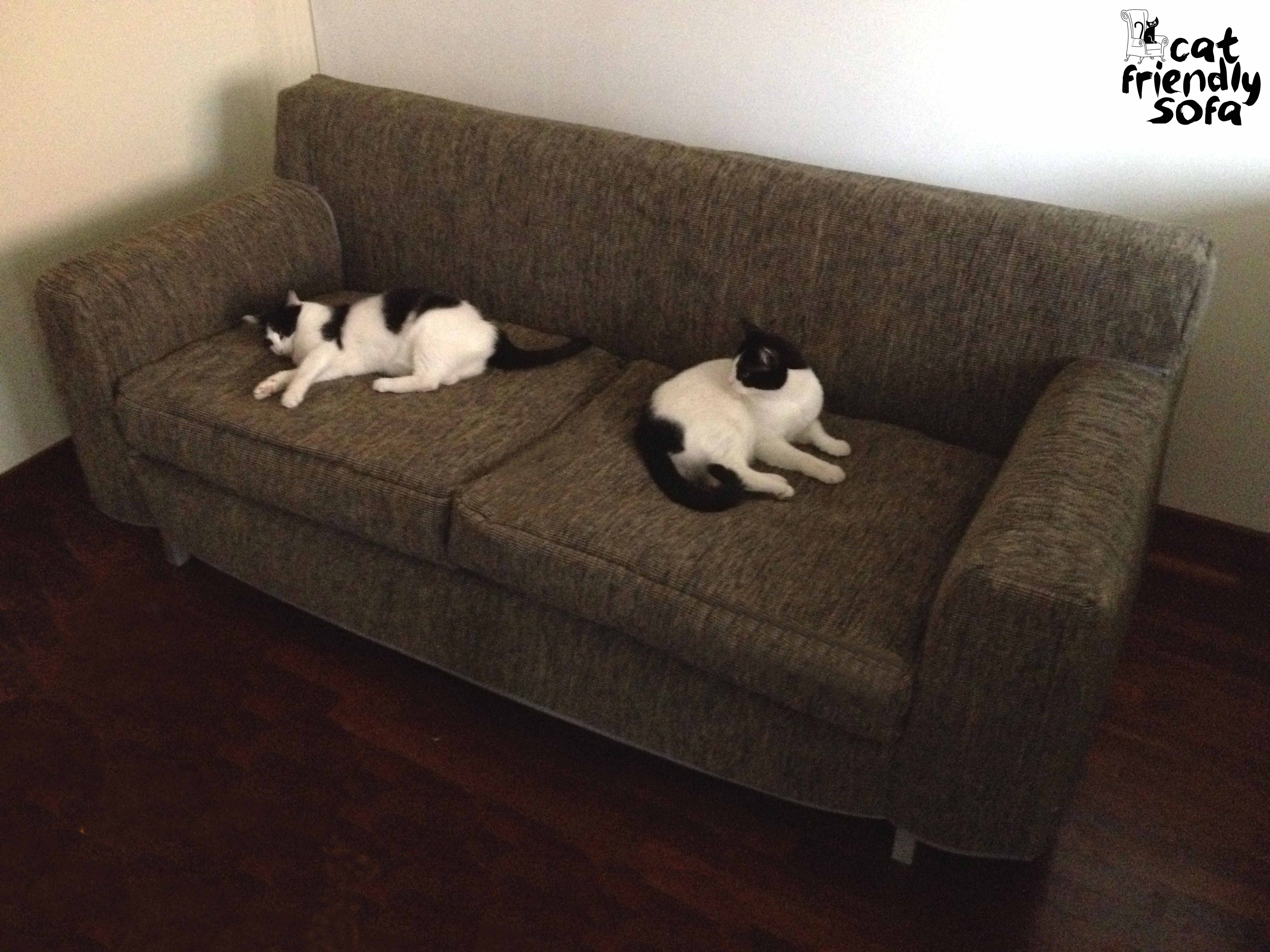 Reviews On Cat-Proof Sofa Covers | Cat Friendly Sofa for Pet Proof Sofa Covers (Image 7 of 15)