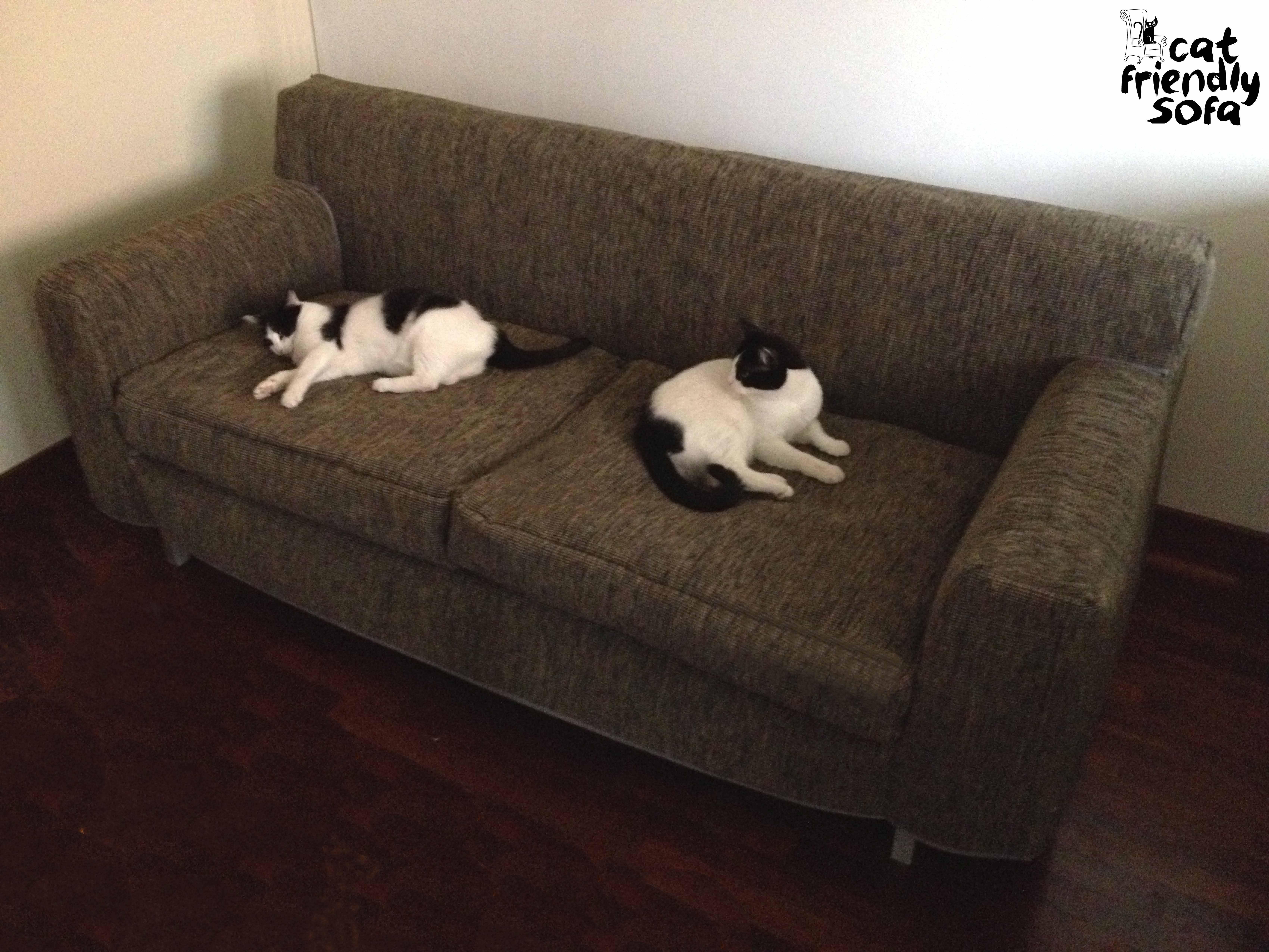 Dog Proof Sofa Slipcovers Centerfieldbar Com