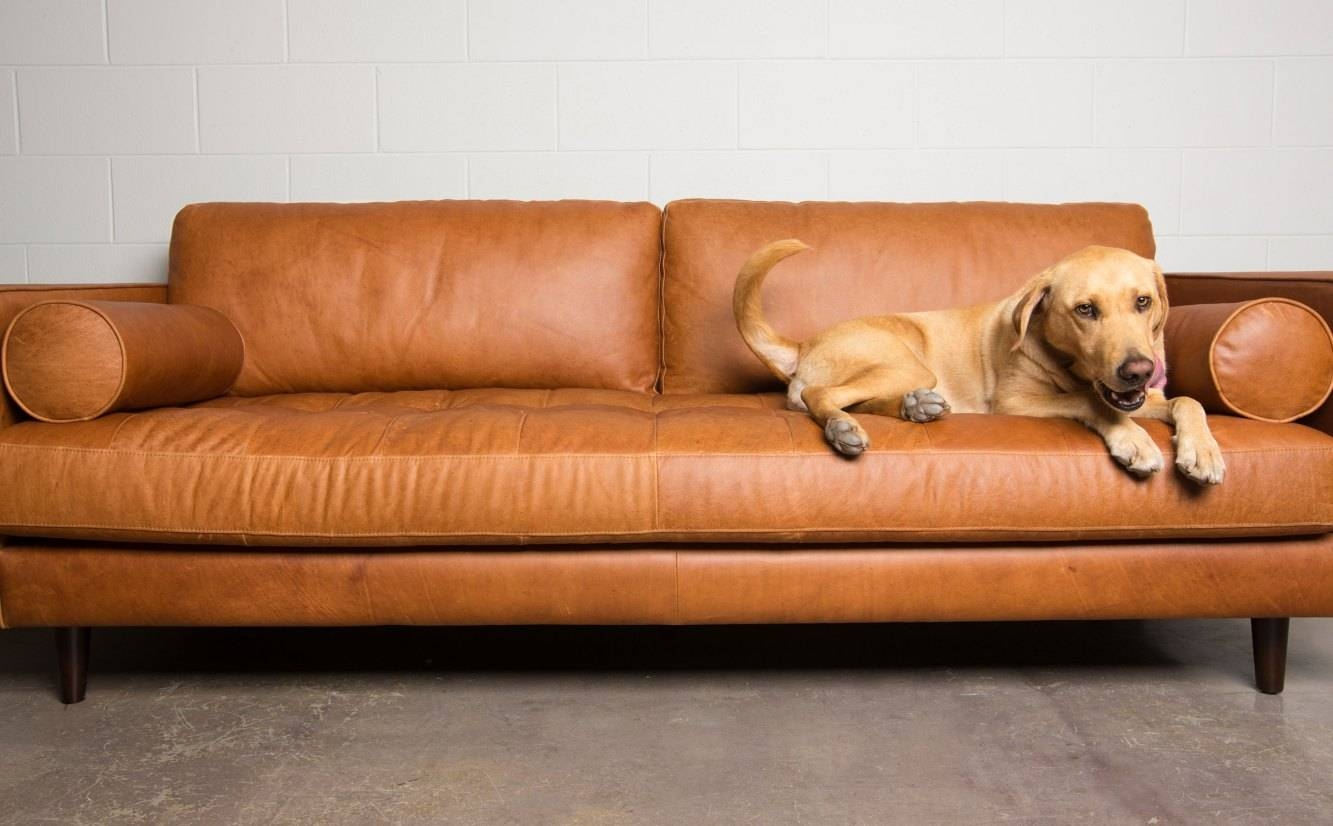 Sofa : Camel Color Leather Sofa Acceptable Camel Color Leather With Regard To Camel Color Leather Sofas (Photo 6 of 15)