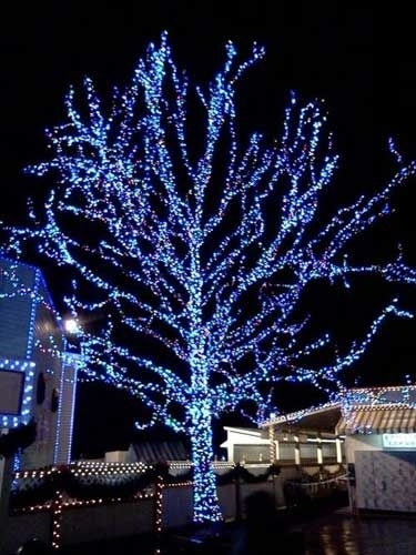 213 Best Outdoor Christmas Ideas & Lights Images On Pinterest Intended For Hanging Lights On Large Outdoor Tree (Photo 4 of 10)