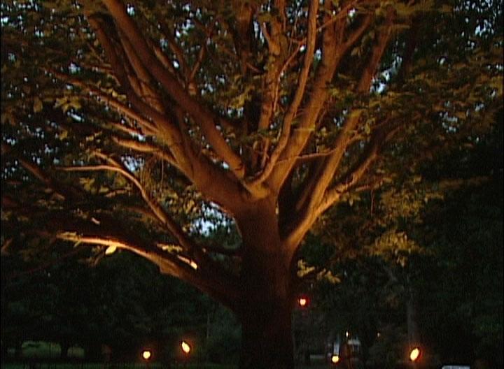 Outdoor Low Voltage Hanging Tree Lights - Outdoor Designs for Outdoor Hanging Low Voltage Lights (Image 9 of 10)