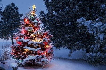 Tips For Hanging Outdoor Christmas Lighting – Outdoor Trees! - regarding Hanging Lights on Large Outdoor Tree (Image 9 of 10)