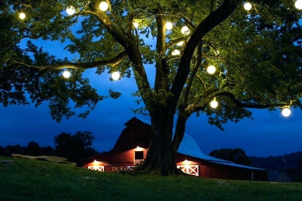 Tree Lights Landscape – Mercadolibre.club inside Hanging Lights on an Outdoor Tree (Image 10 of 10)