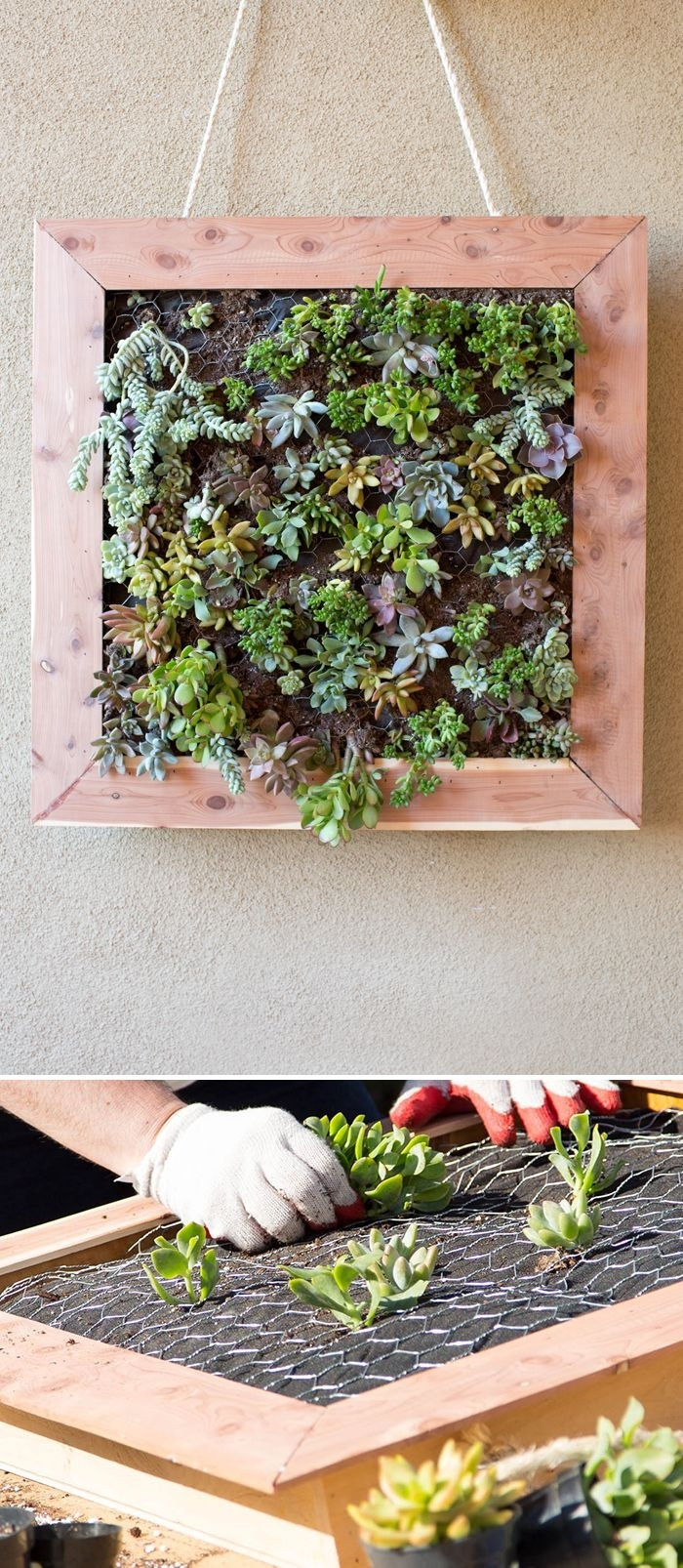 97 Best Succulents Images On Pinterest House Plants Gardening And within Succulent Wall Art (Image 1 of 20)