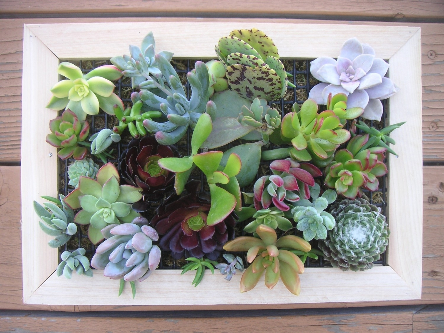 97 Living Wall Art Succulents An Old Picture Frame In Living Wall regarding Succulent Wall Art (Image 2 of 20)