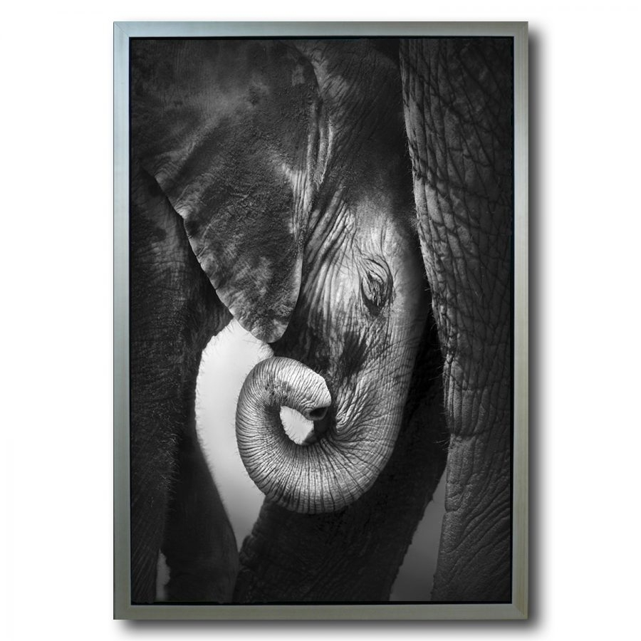 Baby Elephant (framed) Wall Art – Stage Design With Elephant Wall Art (View 9 of 20)