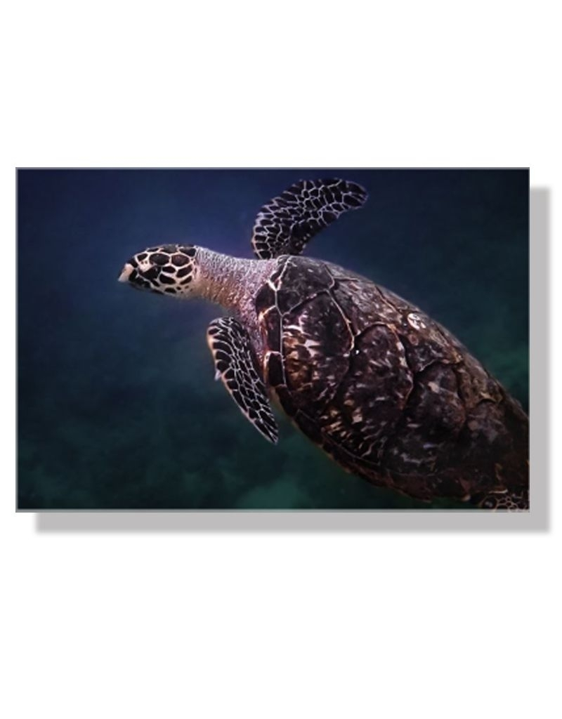 Charles W Gallery Wrapped Canvas Wall Art Print 003 Sea Turtle In Sea Turtle Canvas Wall Art (View 7 of 20)