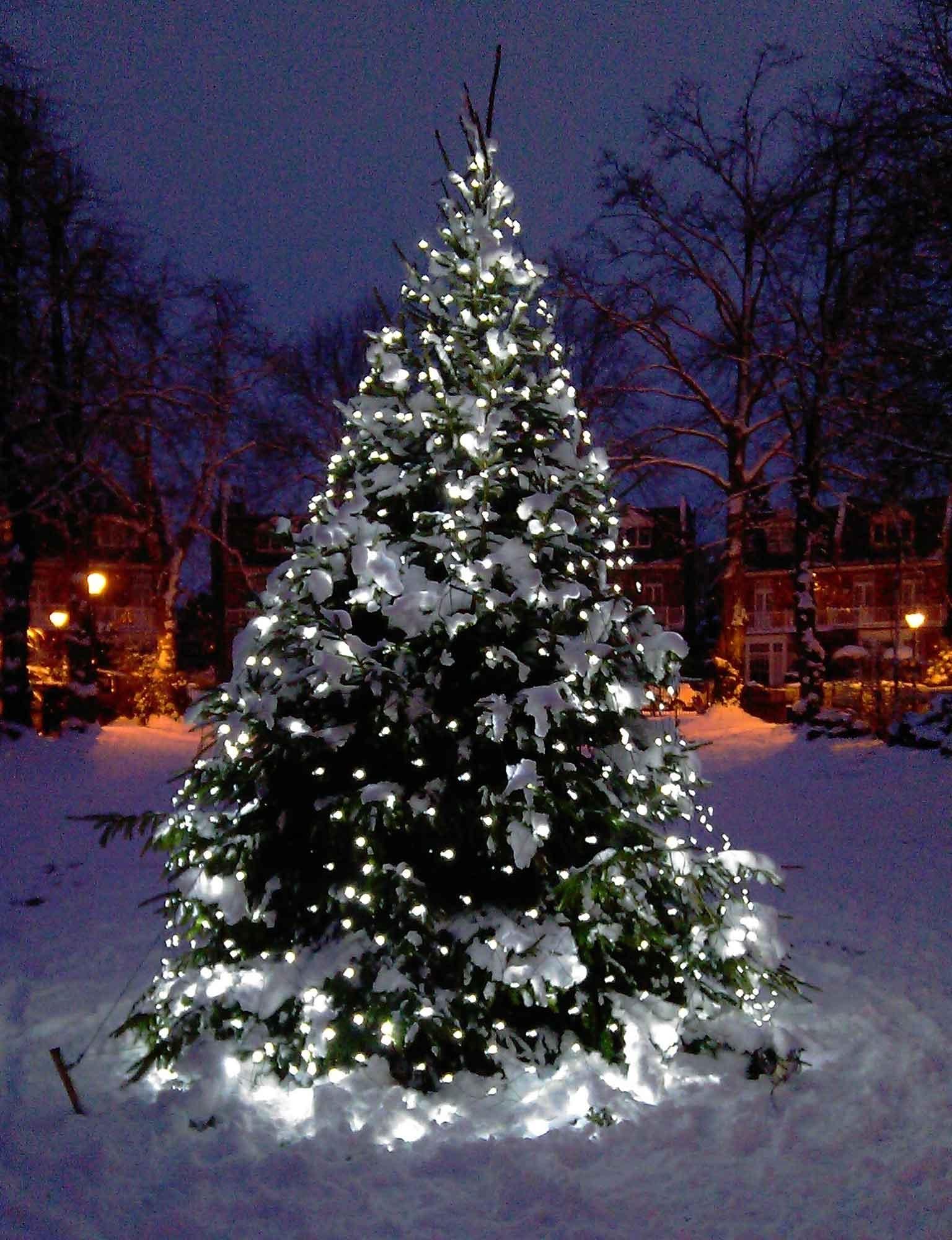Christmas Tree Light Ideas | Christmas Light Ideas | Inspiration with regard to Outdoor Xmas Lanterns (Image 8 of 20)