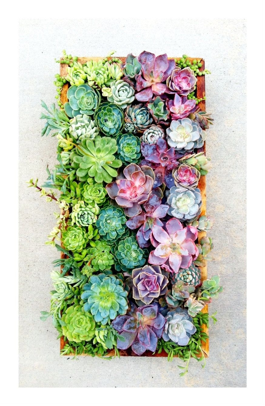 Decorate Your Vertical! Vertical Succulent Wall Art Made To Order Regarding Succulent Wall Art (View 3 of 20)