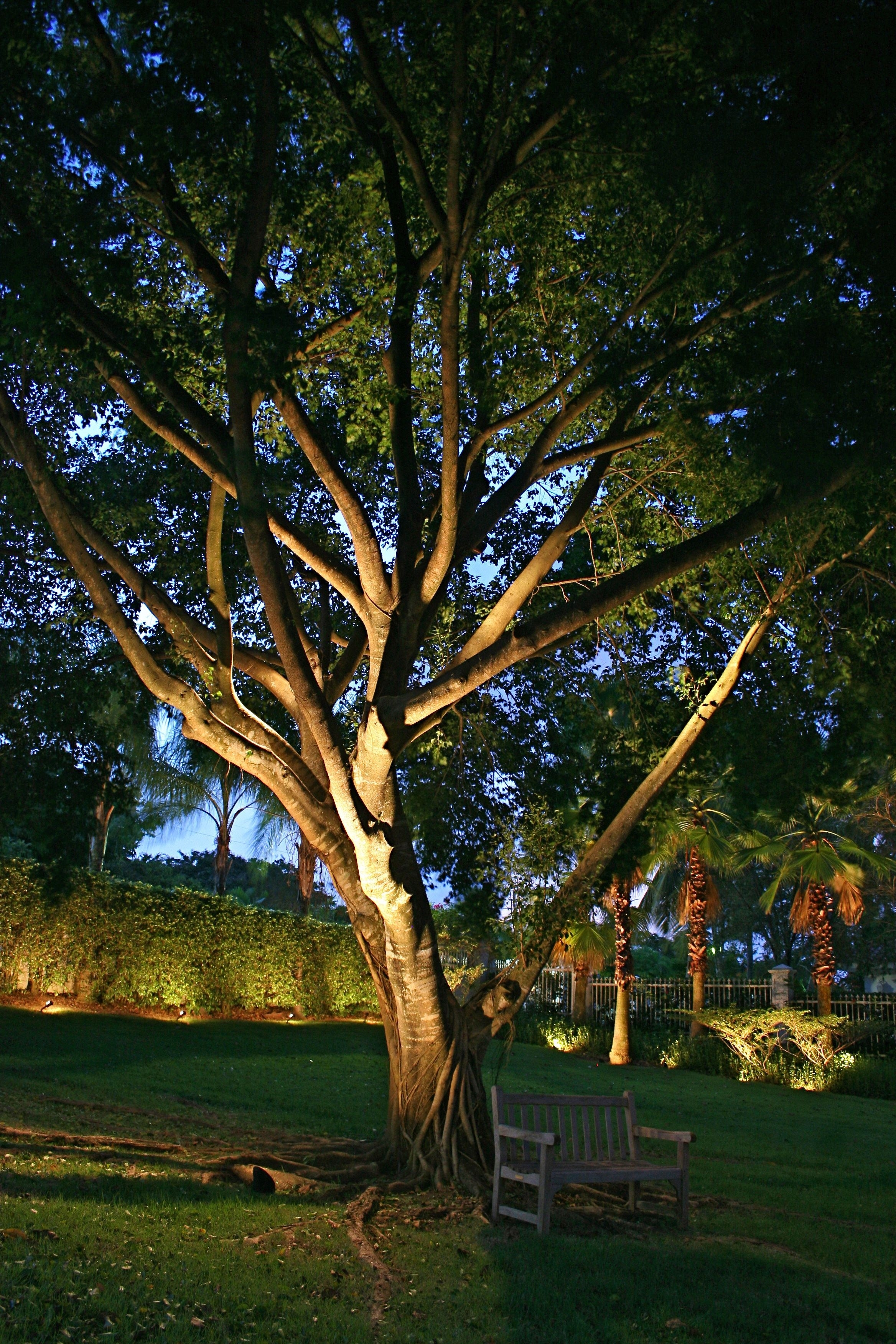 Delectable Outdoor Tree Lights Ideas | Creative Design | Pinterest with regard to Outdoor Lanterns For Trees (Image 7 of 20)