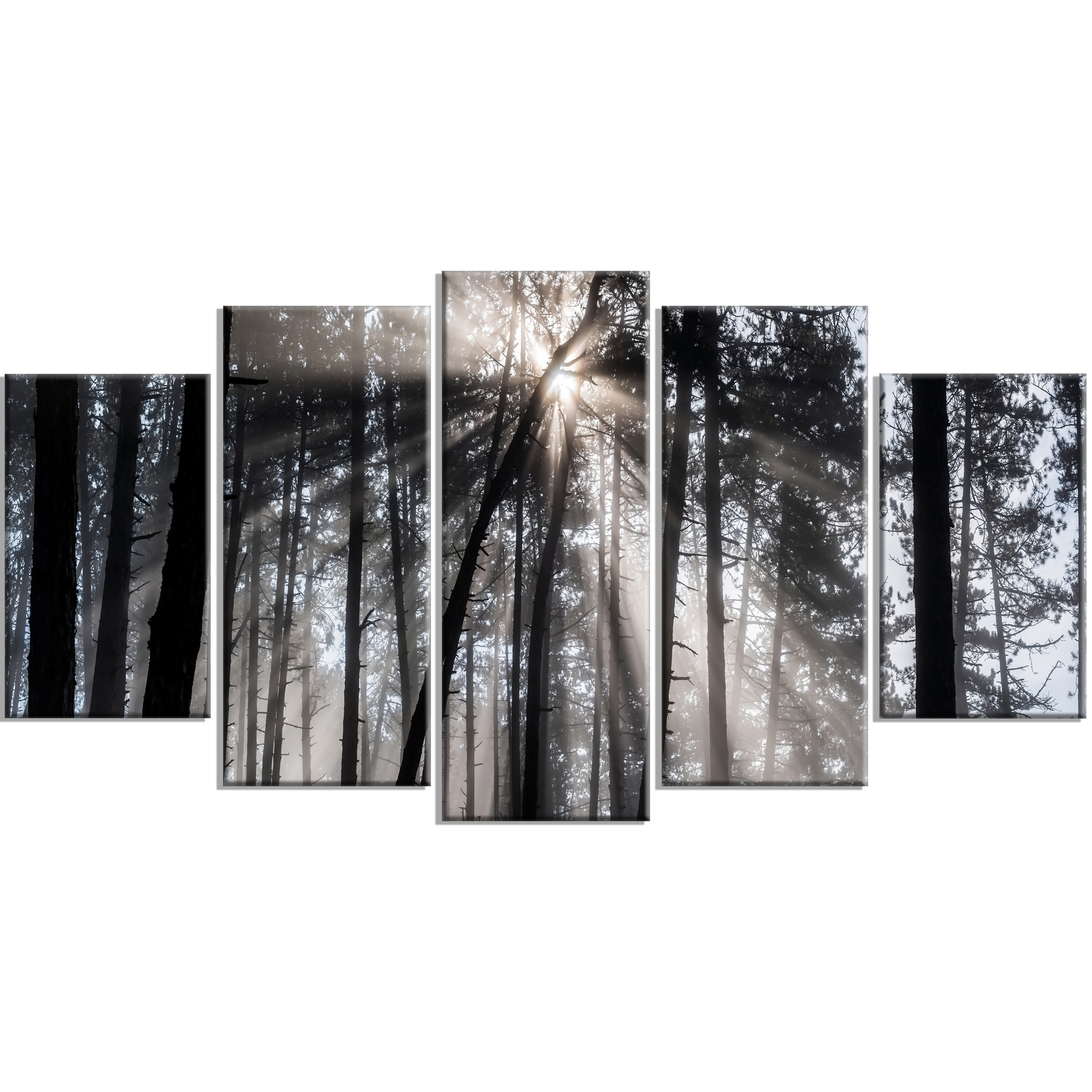 Designart 'sunbeams Through Black White Forest' 5 Piece Wall Art On intended for Black and White Wall Art (Image 10 of 20)