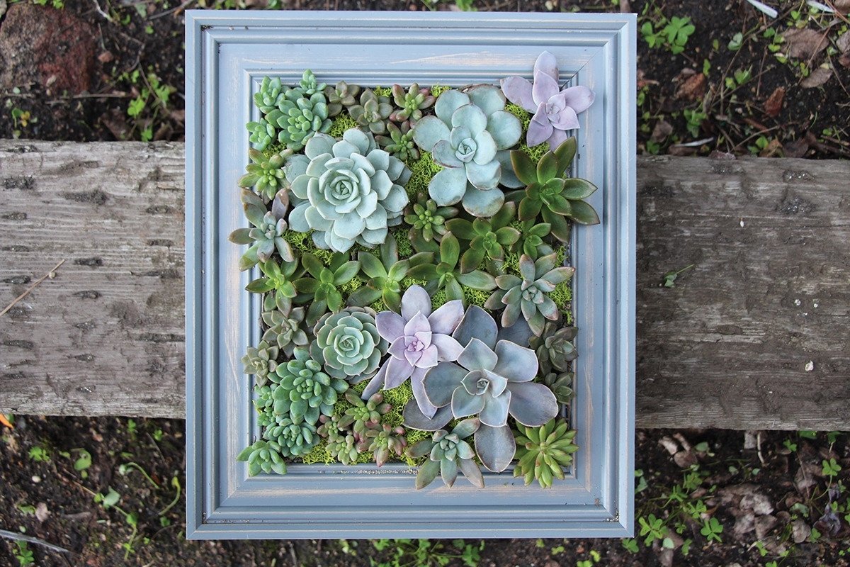 Diy A Framed Succulent Wall Planter Do It Yourself Projects Lonny throughout Succulent Wall Art (Image 4 of 20)