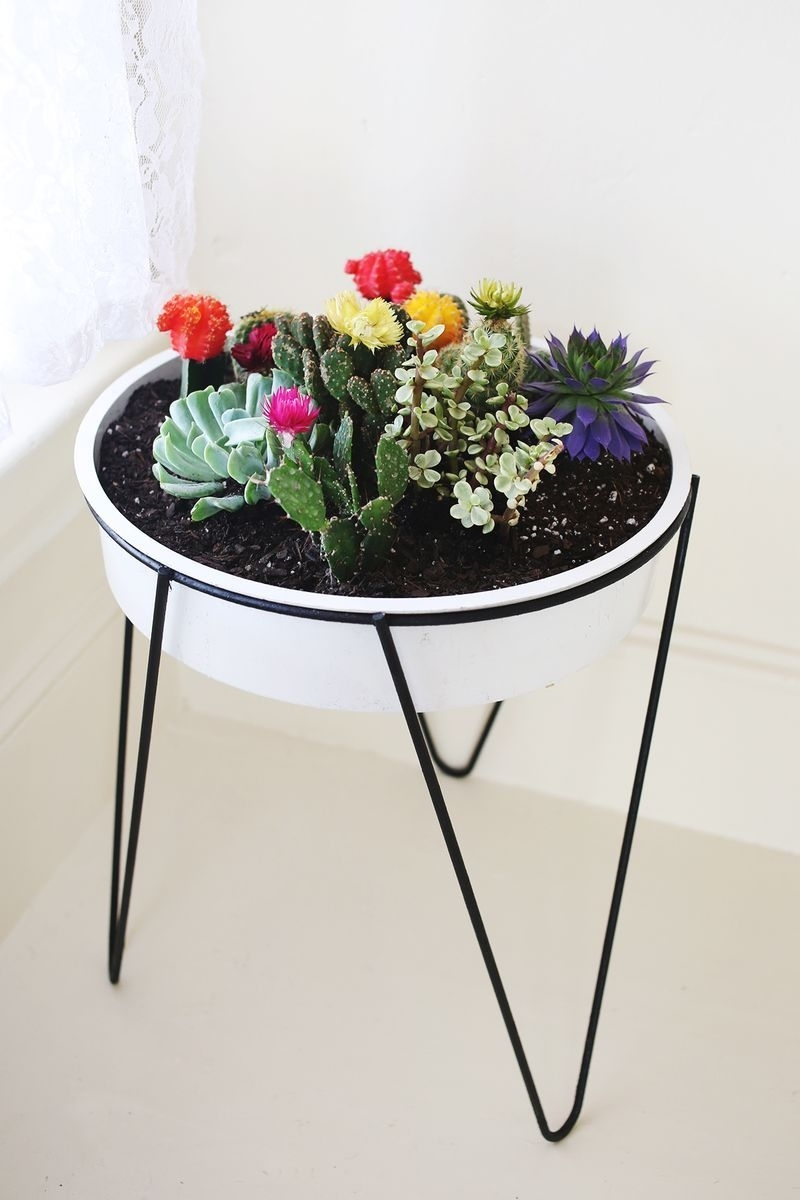 Houseplant Inspiration | Plants | Pinterest | Cacti, Planters And within Cacti Brass Coffee Tables (Image 16 of 30)