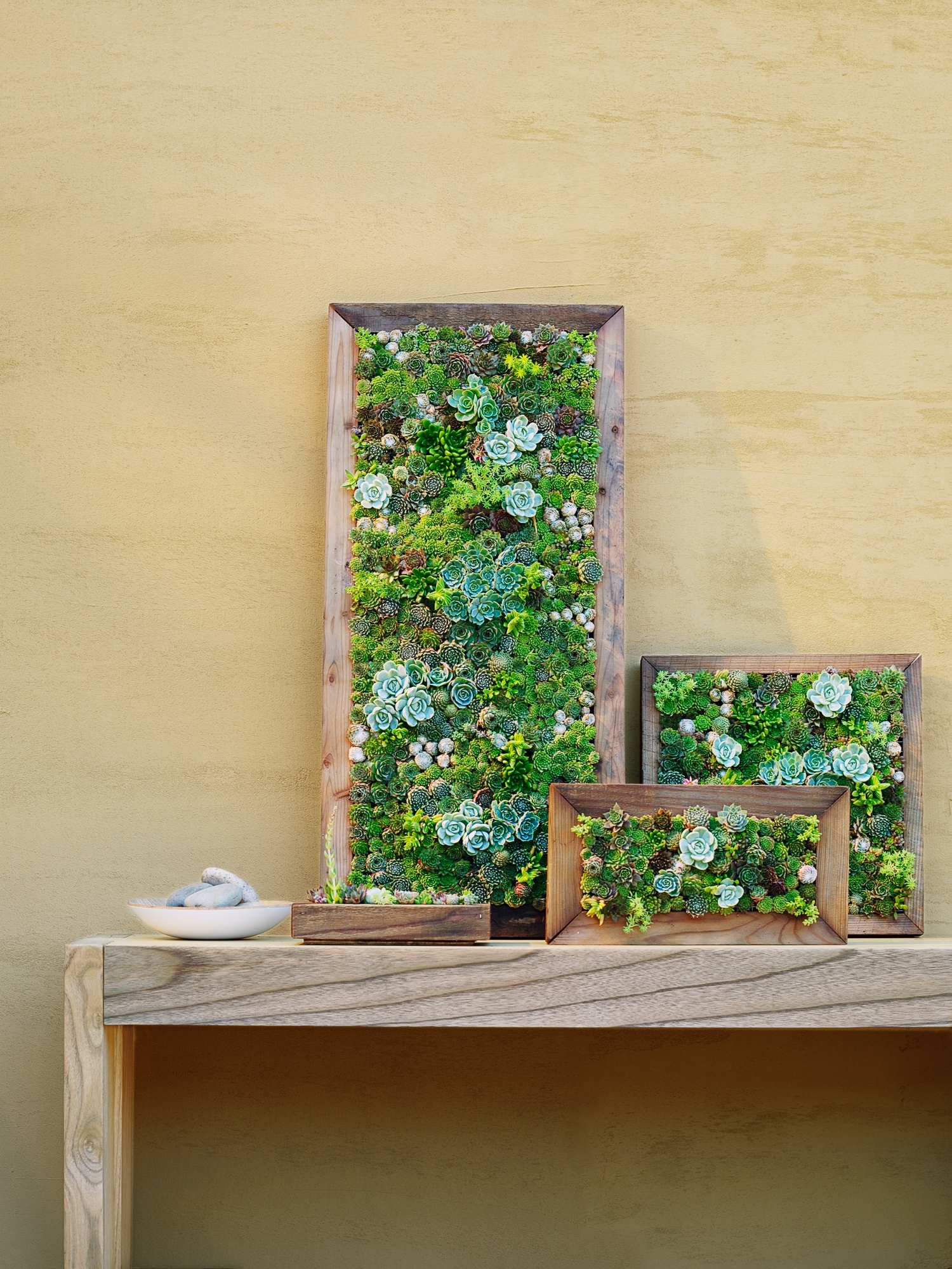 How To Make Vertical Succulent Gardens - Sunset Magazine for Succulent Wall Art (Image 7 of 20)