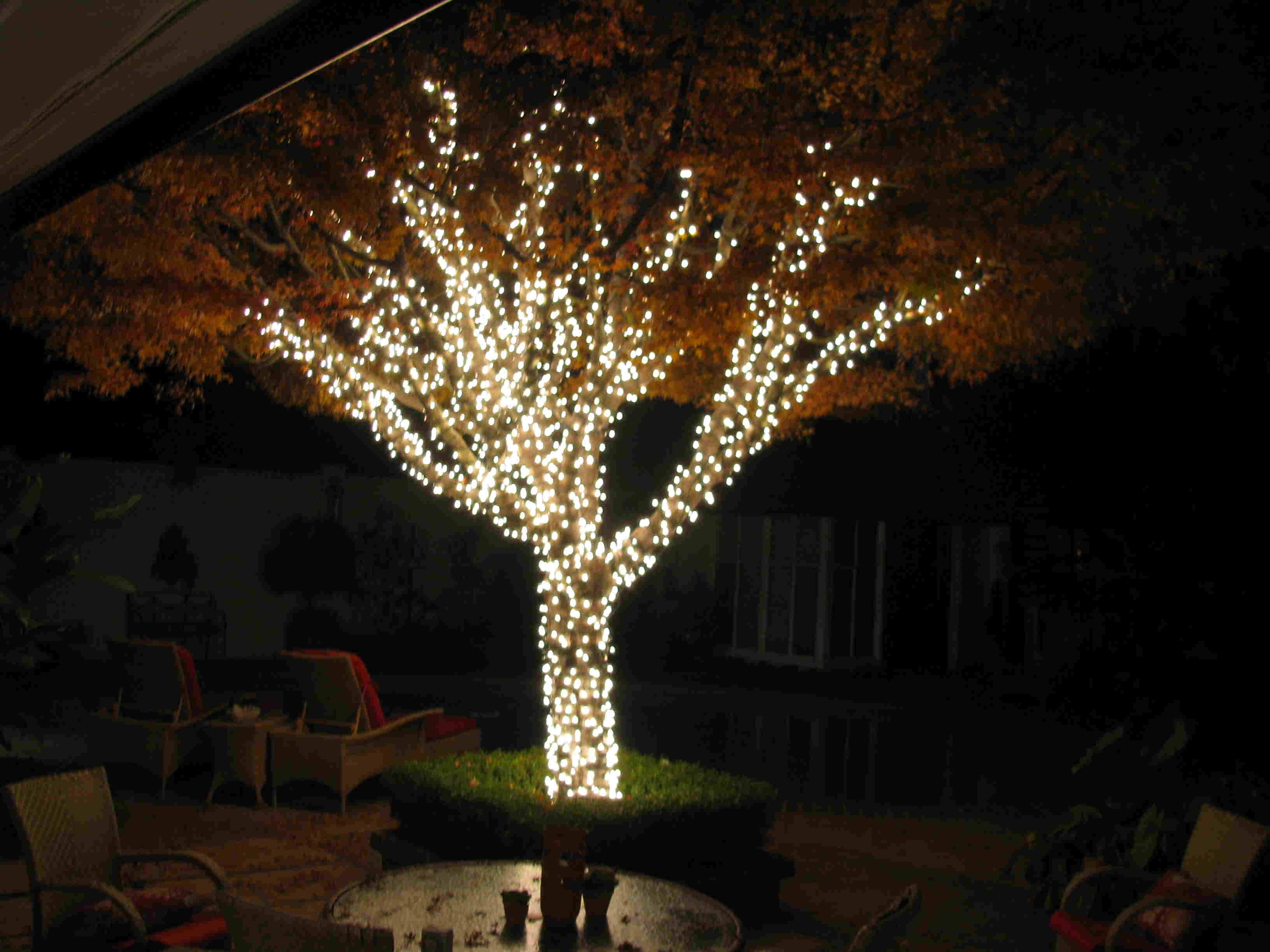 Illuminate Your Backyard And Garden With Outdoor Tree Lights with regard to Outdoor Lanterns for Trees (Image 12 of 20)