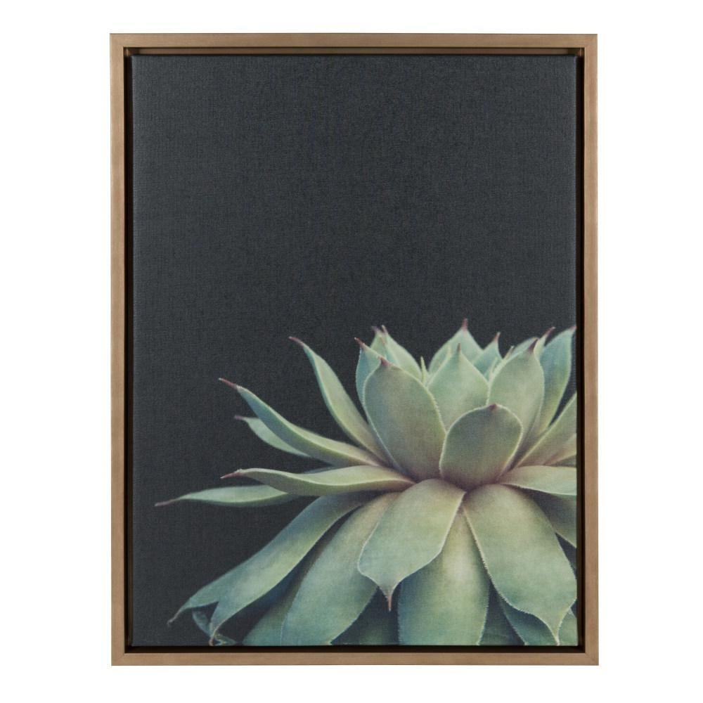 "Kate And Laurel Sylvie ""succulent 8""f2Images Framed Canvas Wall Regarding Succulent Wall Art (Gallery 14 of 20)"