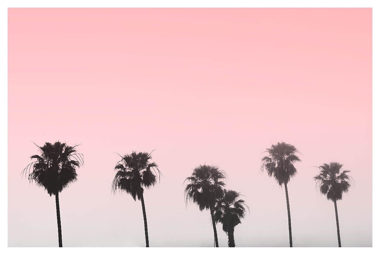 Minimalist Palm Tree Print | Poster Print | Capricorn Press pertaining to Pink Wall Art (Image 15 of 20)