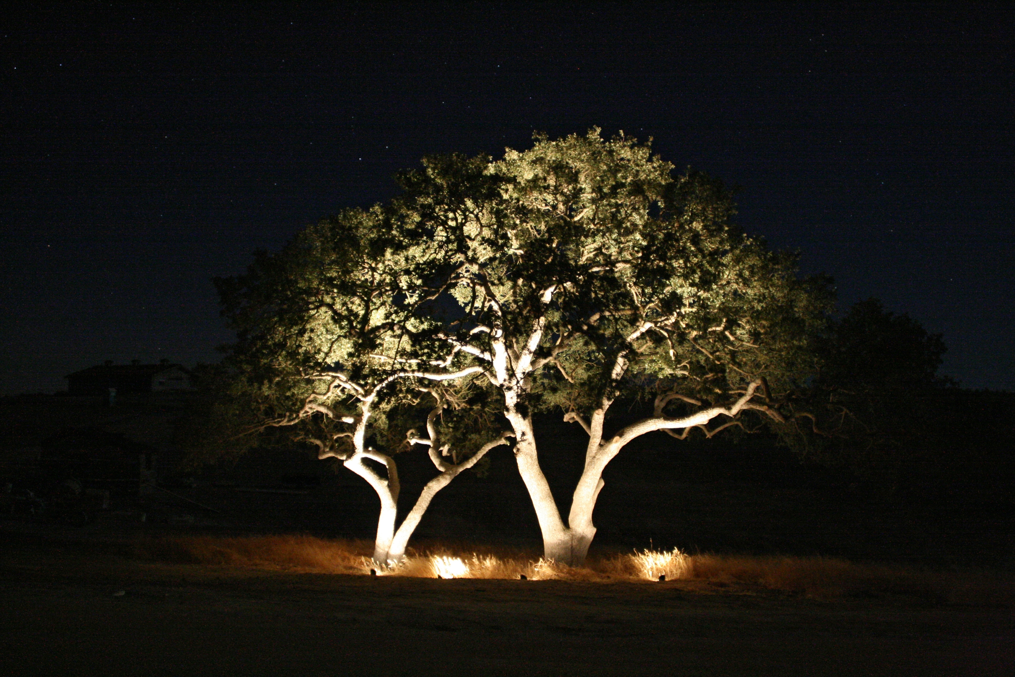 Outdoor Lighting Ideas Trees Spotlights For Lighted Christmas Tree with Outdoor Lanterns for Trees (Image 17 of 20)