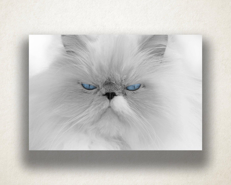 Persian Cat Canvas Art, White Fluffy Cat Wall Art, Cat Canvas Print In Cat Canvas Wall Art (View 17 of 20)