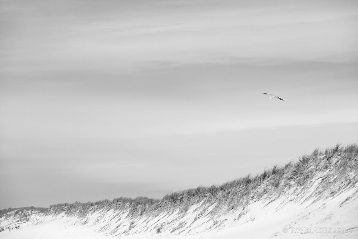 Photo Print Of Southampton Long Island Beach Dunes Seagull Black And Pertaining To Long Island Wall Art (Photo 14 of 20)