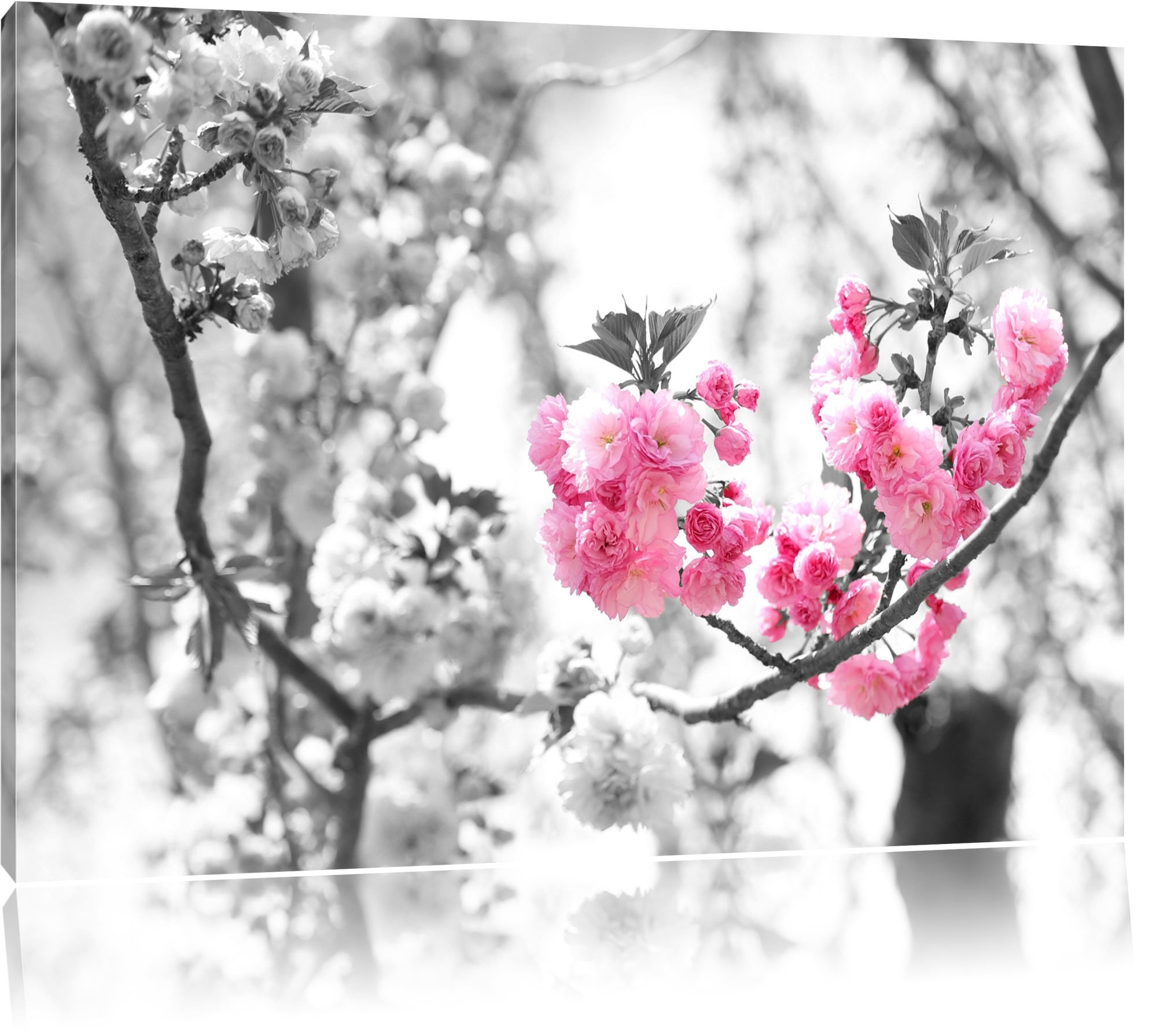 Pixxprint Beautiful Cherry Blossom Wall Art On Canvas | Wayfair.co.uk with regard to Cherry Blossom Wall Art (Image 14 of 20)