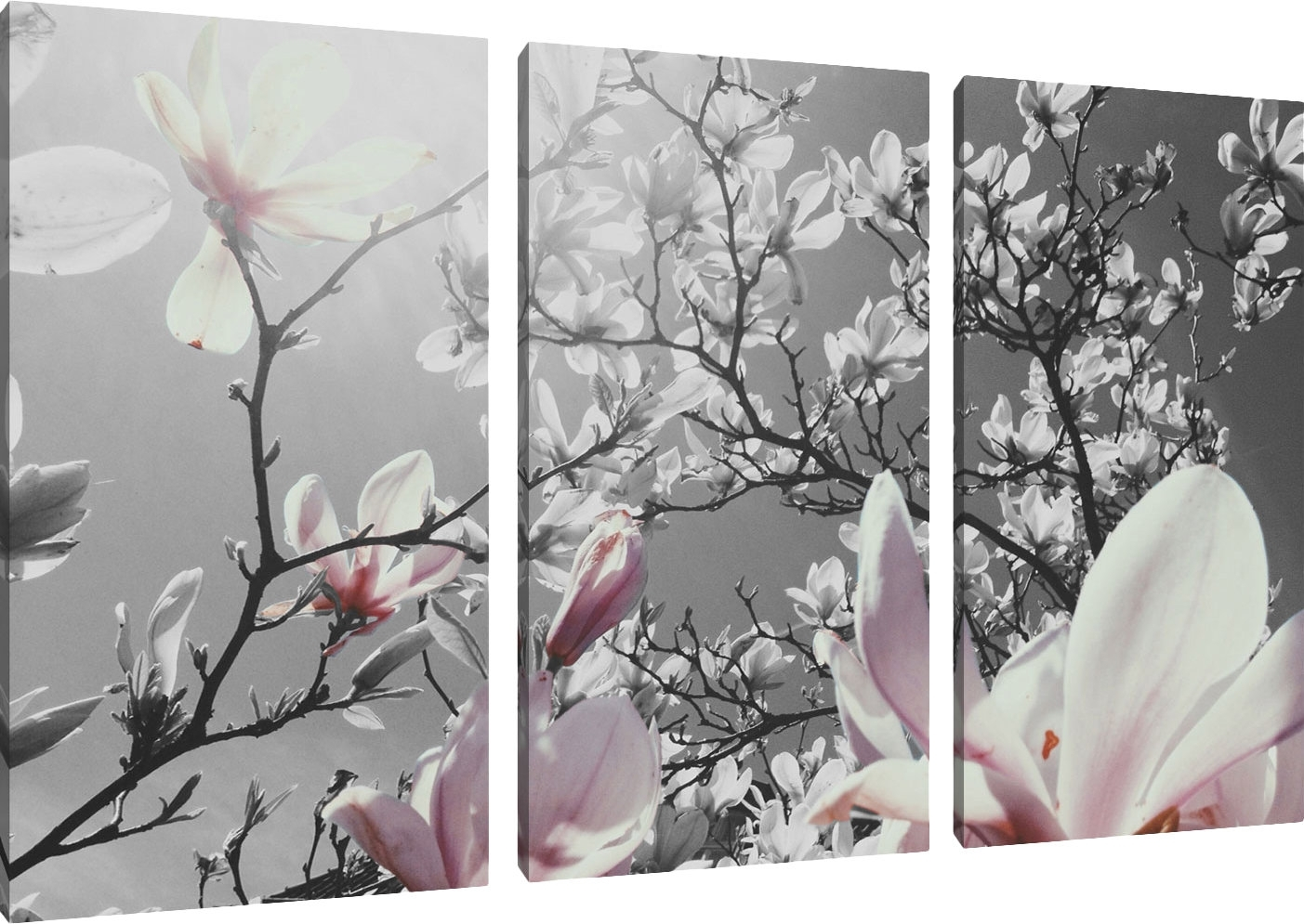 Pixxprint Beautiful Magnolia Flowers 3 Piece Wall Art Set On Canvas regarding 3 Piece Wall Art (Image 19 of 20)