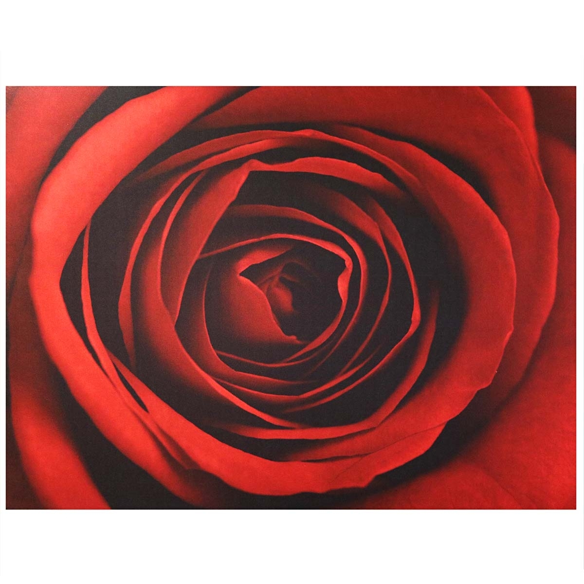 Red Rose Canvas Wall Art | Harry Corry Limited for Red Canvas Wall Art (Image 20 of 20)