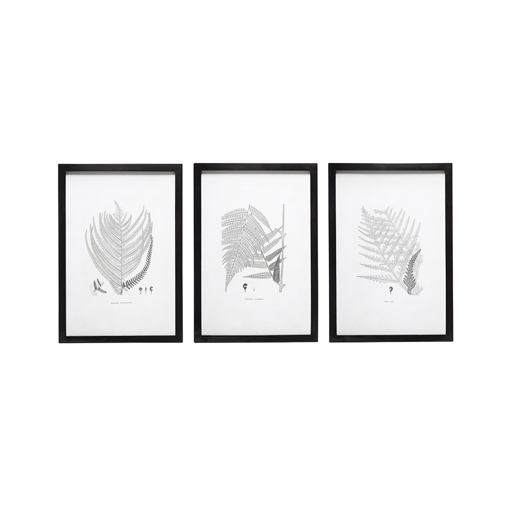 Set Of 3 Black & White Wall Art Polypody Framed Print Poster Picture within Black And White Wall Art (Image 17 of 20)
