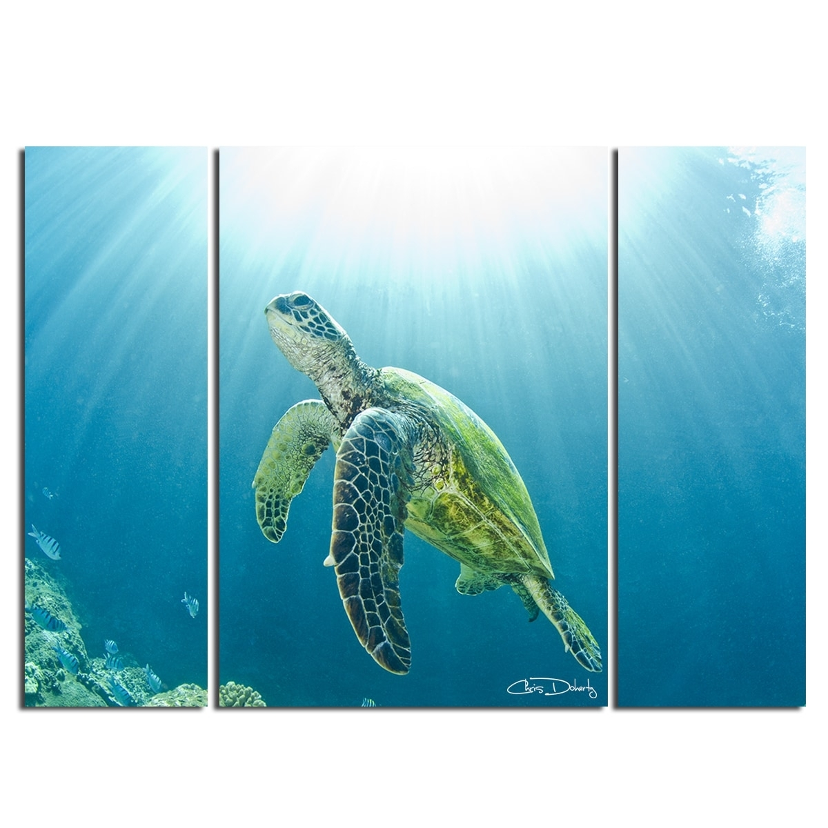 Shop Christopher Doherty 'sea Turtle' Canvas Wall Art (3 Piece throughout Sea Turtle Canvas Wall Art (Image 18 of 20)