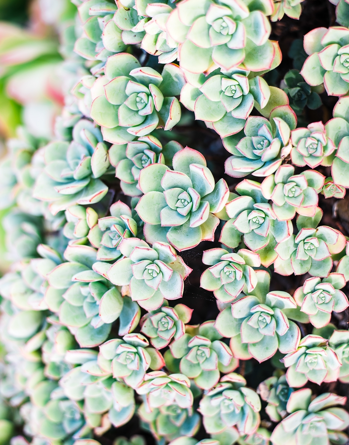 Succulent Wall Art | Home Decor Photography Print | Whitney Finuf Inside Succulent Wall Art (View 14 of 20)
