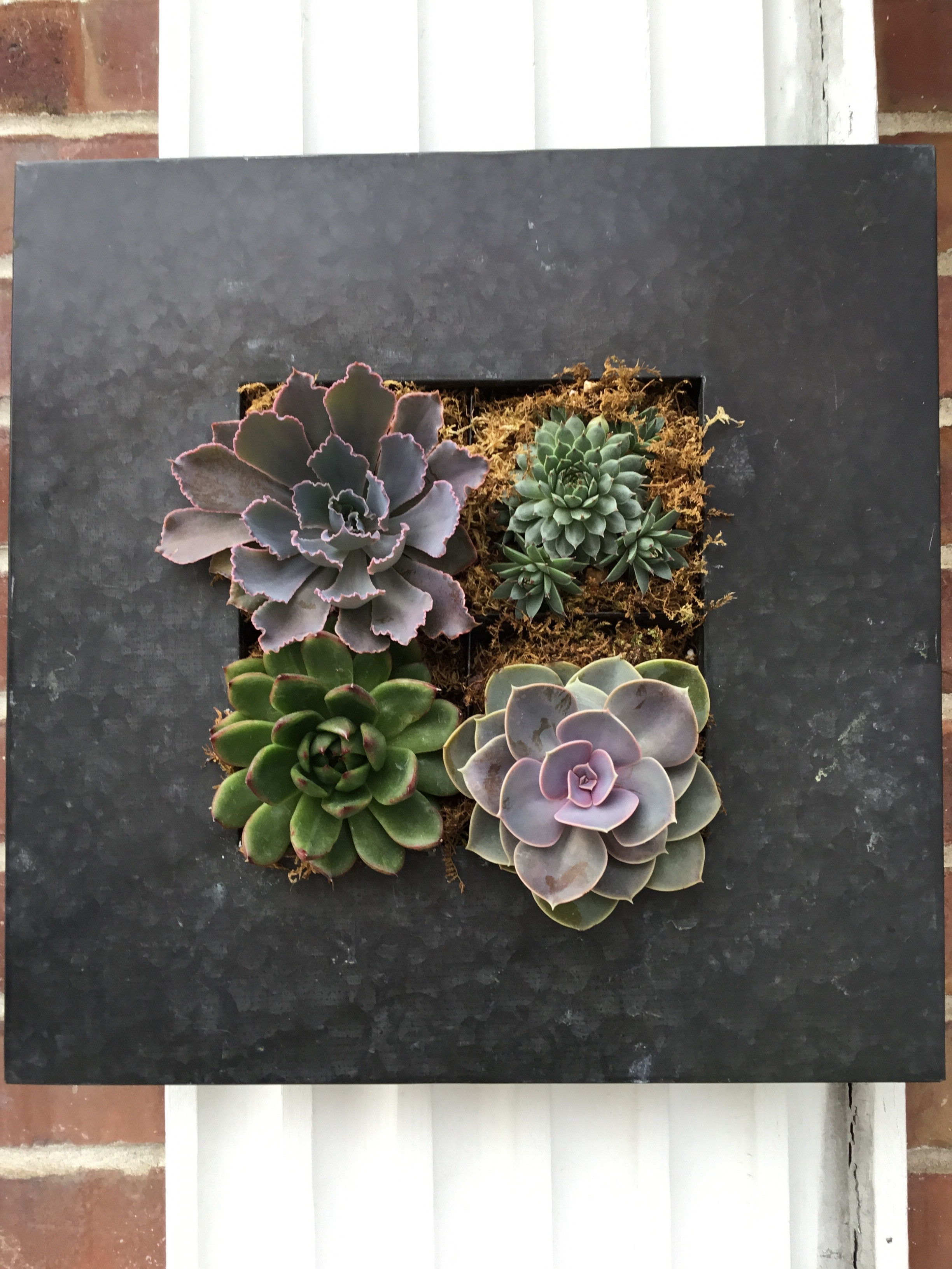 Succulent Wall Hanger In Burlingame, Ca | Floral Art And Decor for Succulent Wall Art (Image 17 of 20)