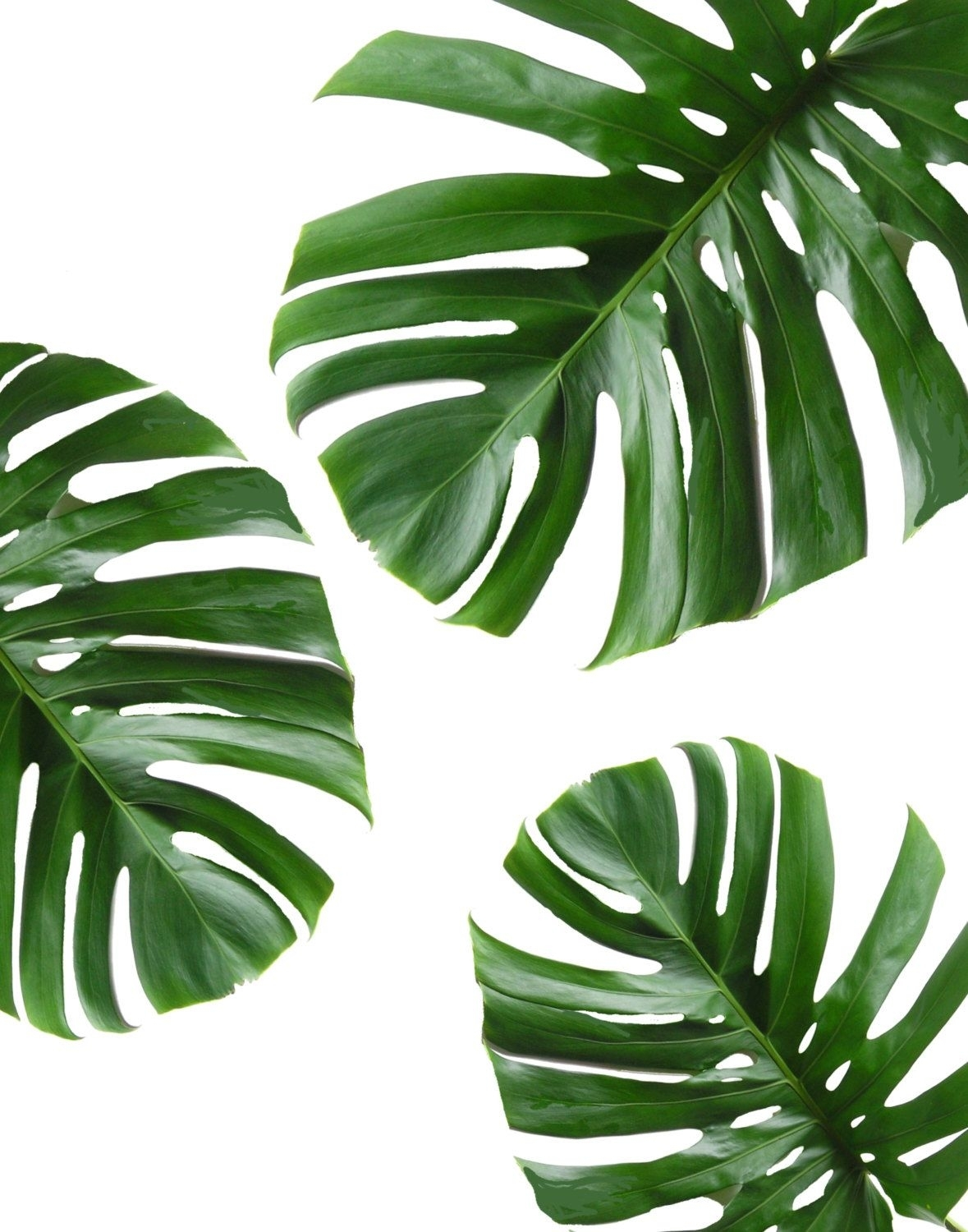 Tropical Leaf, Printable Art, Monstera Leaves, Tropical Leaves for Green Wall Art (Image 20 of 20)