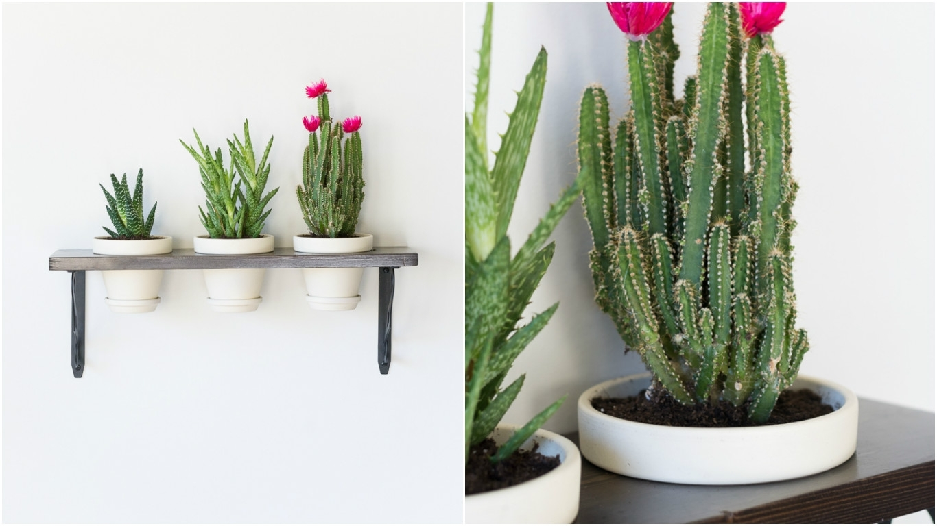 Turn Plants Into Wall Art With This Diy Hanging Succulent Garden regarding Succulent Wall Art (Image 18 of 20)