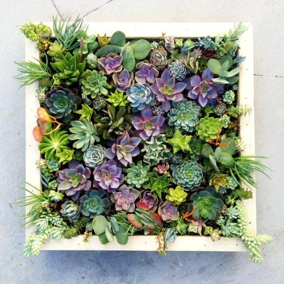Vertical Succulent Wall Art | Gardening | Pinterest | Succulent Intended For Succulent Wall Art (Photo 6 of 20)