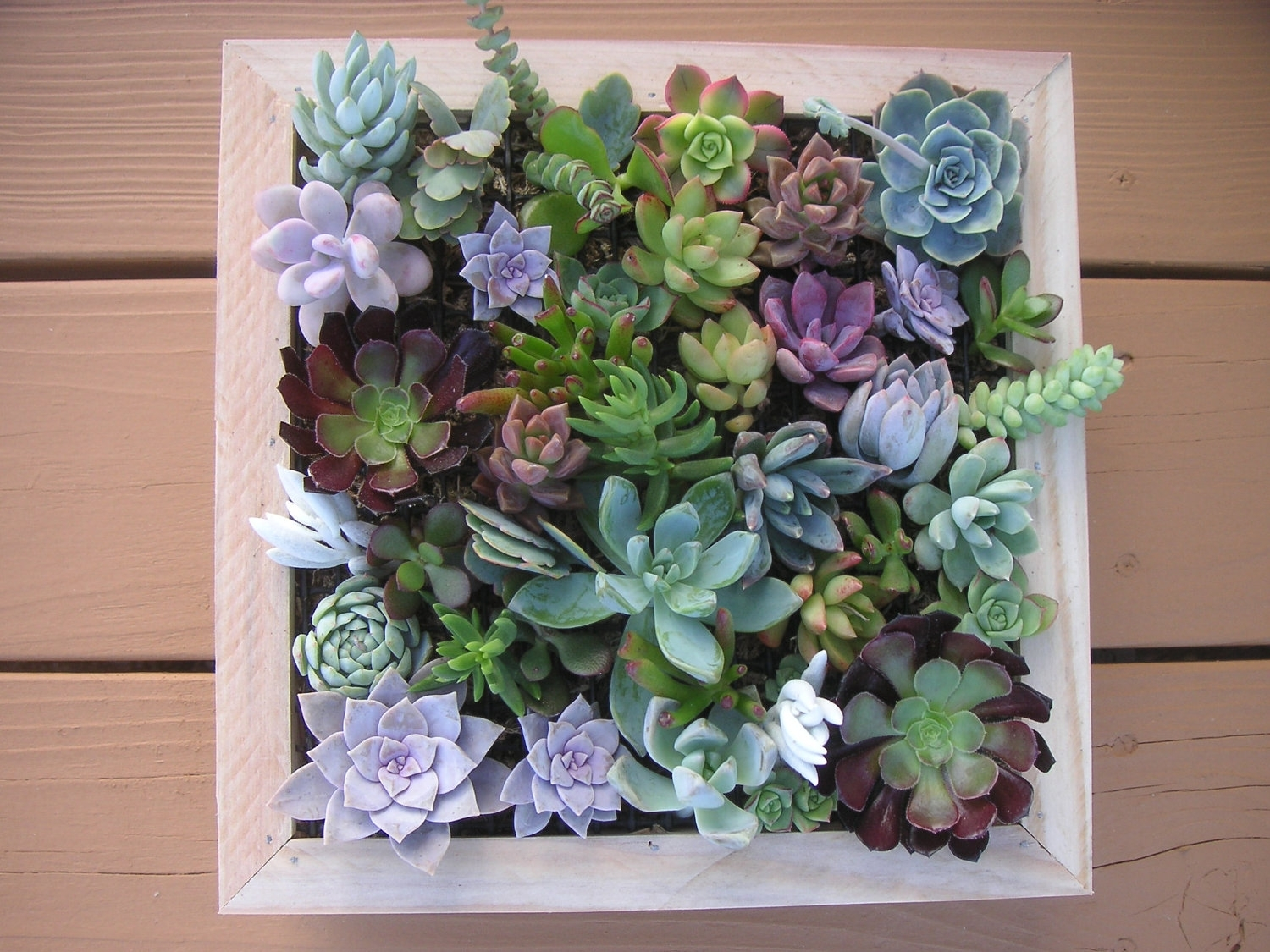 Wall Art Ideas Design Baked Epoxy Succulent Wall Art Give Strenght pertaining to Succulent Wall Art (Image 20 of 20)