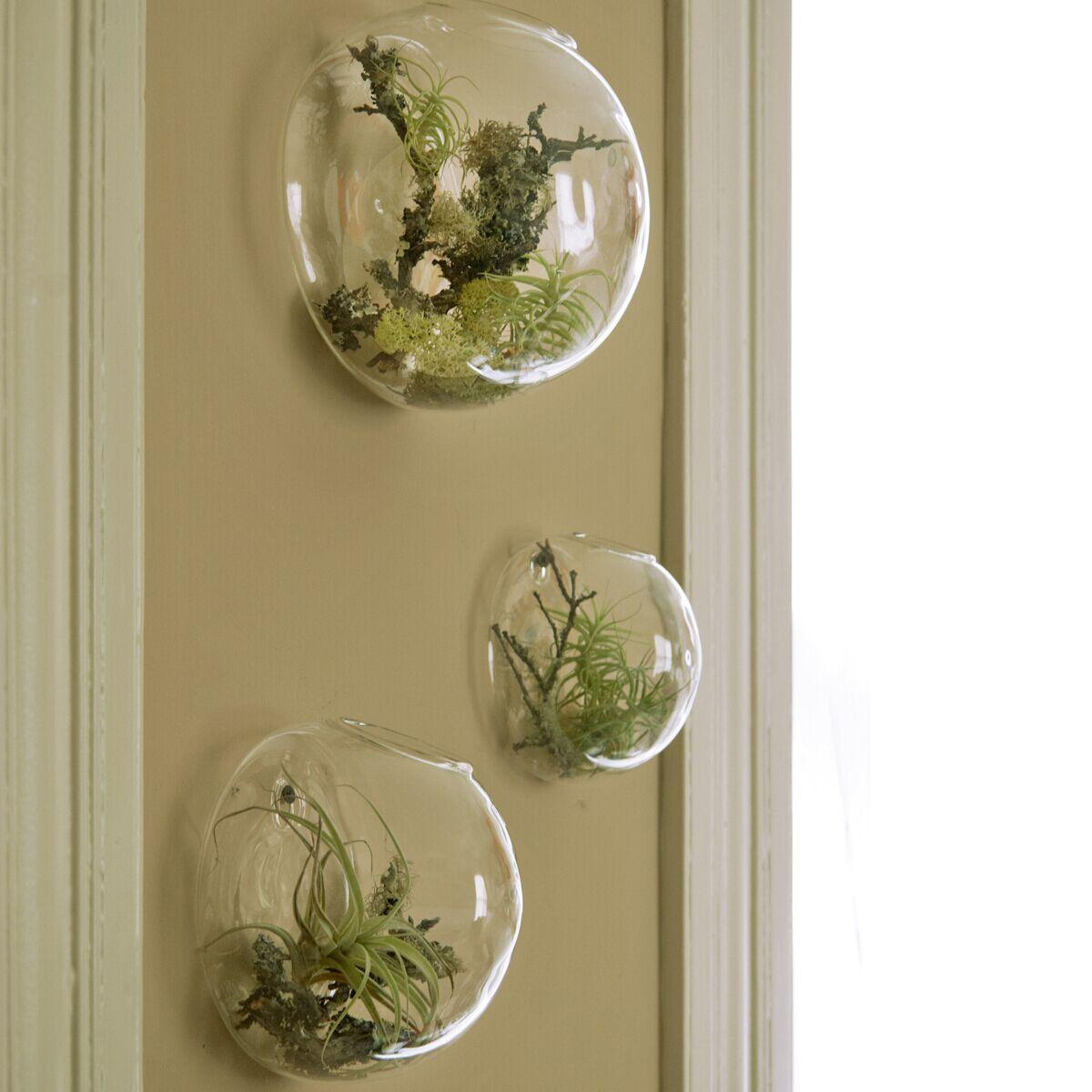 3Pcs/set Wall Bubble Terrariums Glass Wall Vase For Flowers/indoor Plants  Wall Mounted Planter For Succulents Air Plant Holders Home Decor regarding Vase and Bowl Wall Decor (Image 4 of 30)