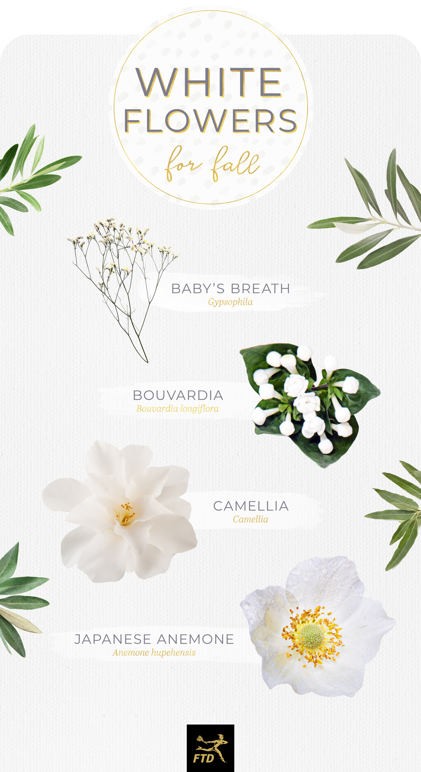 40 Types Of White Flowers – Ftd Regarding Three Flowers On Vine Wall Decor (View 22 of 30)