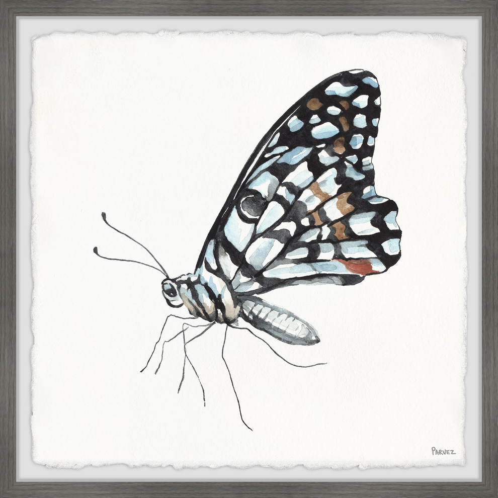 """blue And Black Mariposa"" Framed Painting Print, 12""x12"", 12""x12"" intended for Mariposa 9 Piece Wall Decor (Image 2 of 30)"