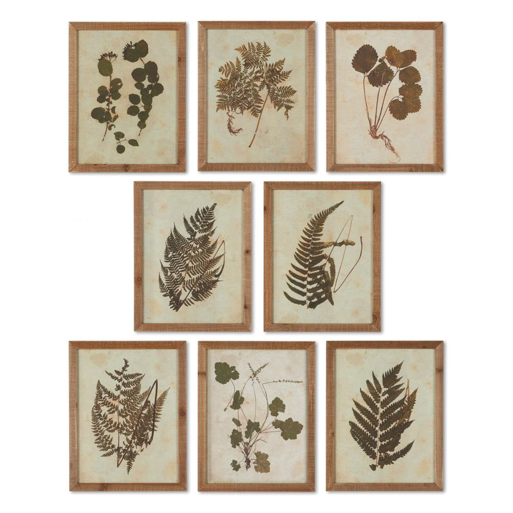 Botanical Specimen' 8 Piece Framed Graphic Art Set In 2019 Throughout 4 Piece Wall Decor Sets By Charlton Home (View 12 of 30)
