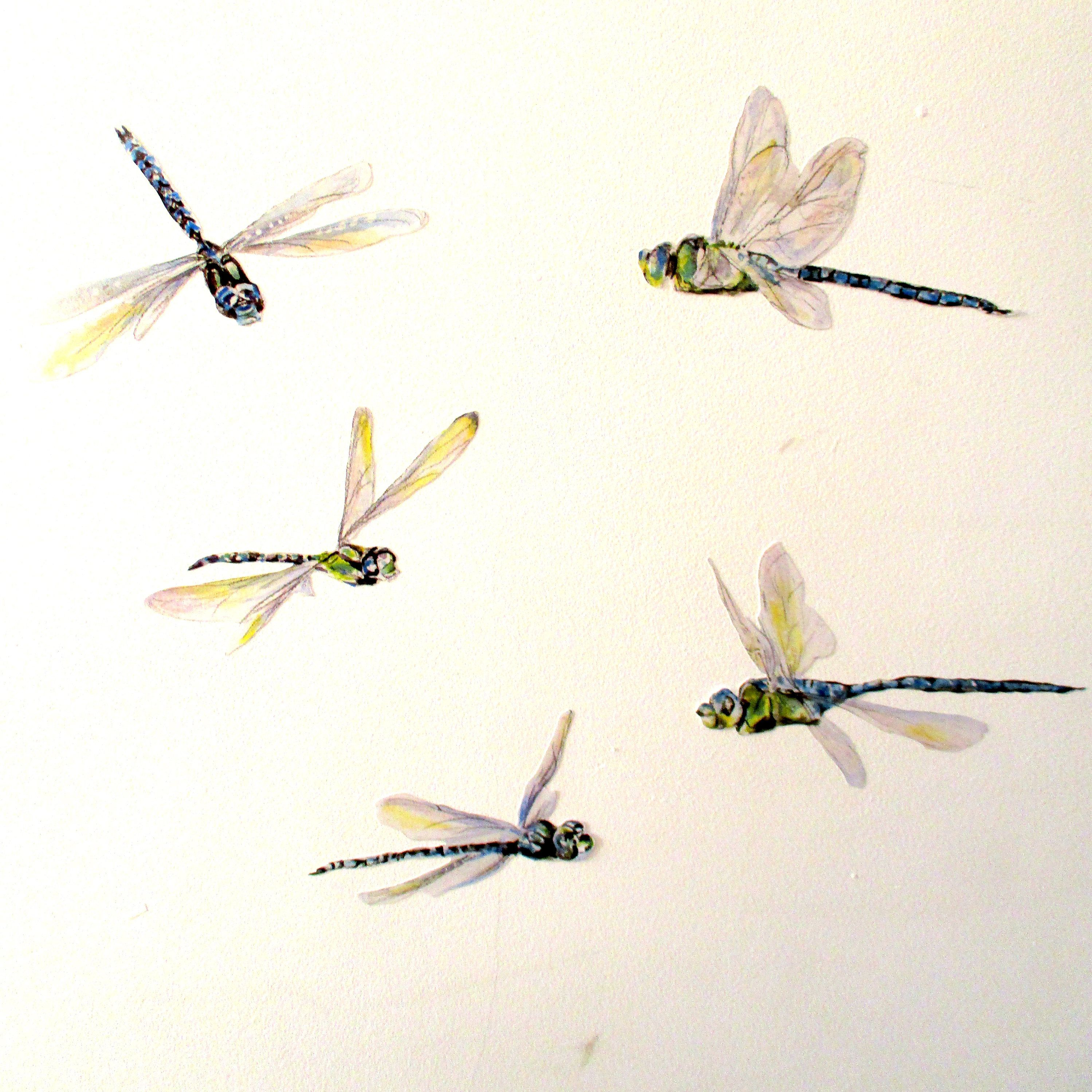 Dragonfly Wall Stickers, Dragonfly Decals, Watercolor Within Dragonfly Wall Decor (Gallery 14 of 30)