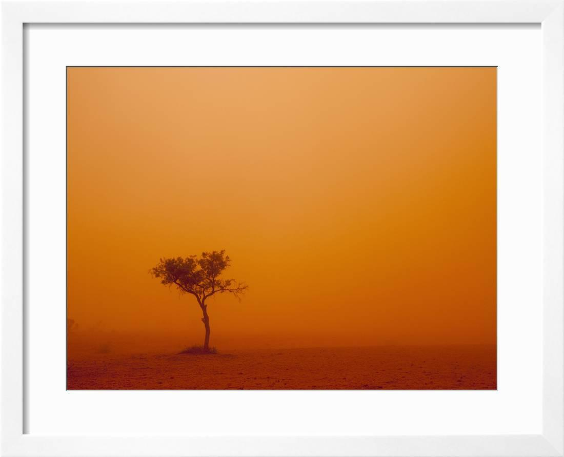 Dust Storm Turns Sky Orange With Blown Sand And Windswept Tree, Ivanhoe,  New South Wales, Australia Framed Print Wall Artpaul Souders Regarding Windswept Tree Wall Decor (Photo 23 of 30)