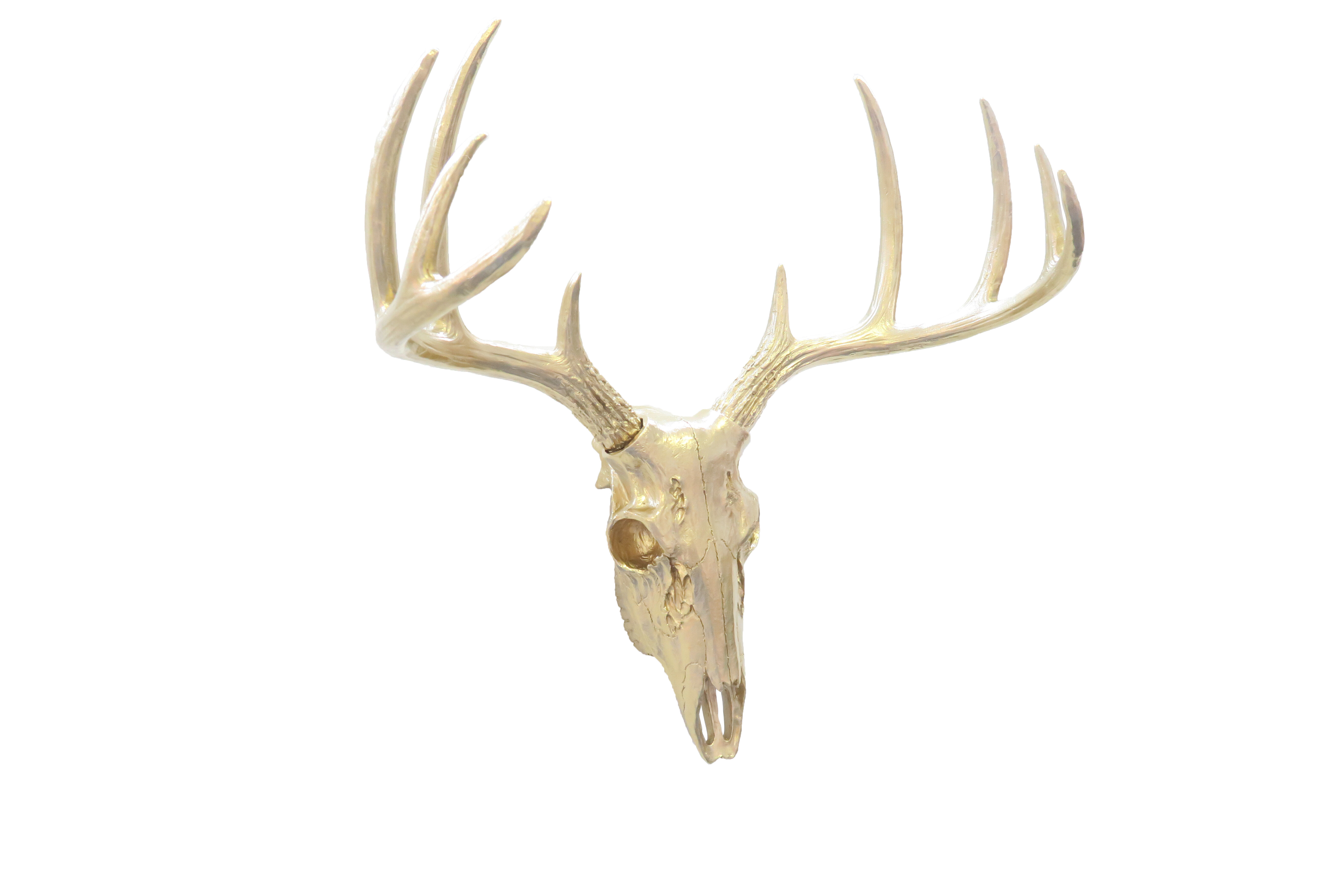 Faux Taxidermy Mini Buck Skull Wall Décor Pertaining To Large Deer Head Faux Taxidermy Wall Decor (View 23 of 30)