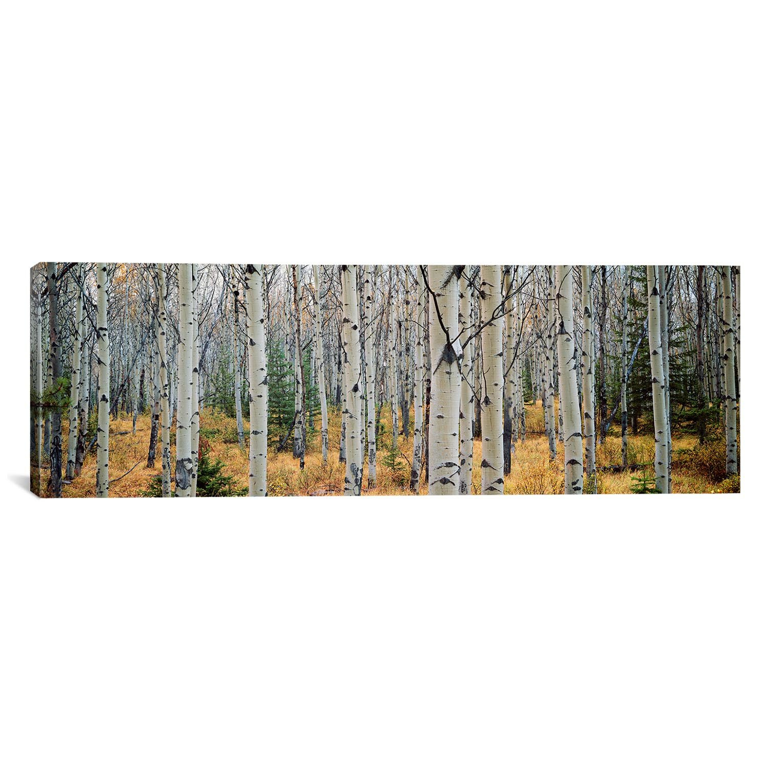 Modern & Contemporary Aspen Trees Wall Art | Allmodern Throughout Contemporary Forest Metal Wall Decor (View 13 of 30)