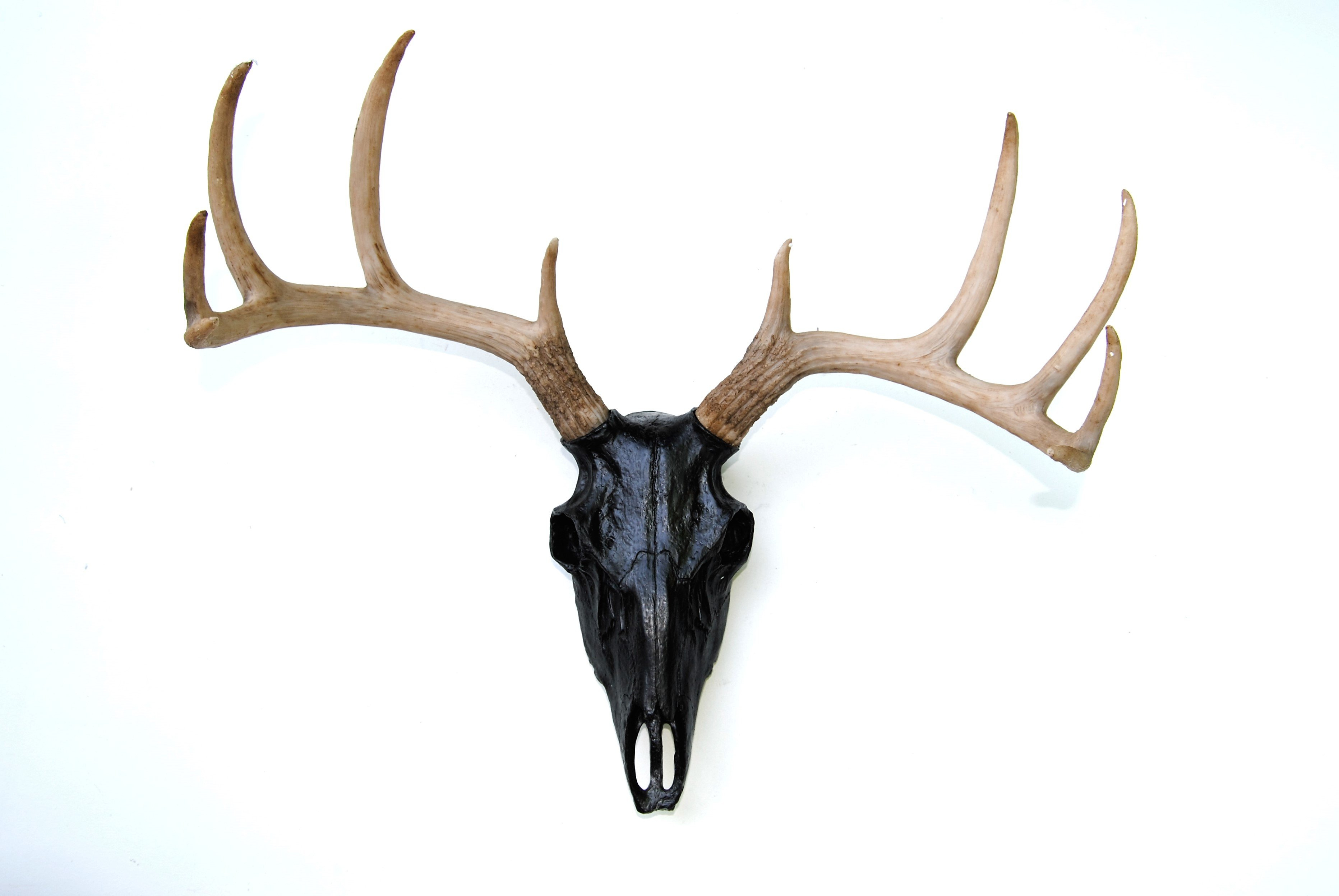 Near And Deer Faux Taxidermy Buck Skull Wall Décor & Reviews Within Large Deer Head Faux Taxidermy Wall Decor (View 8 of 30)