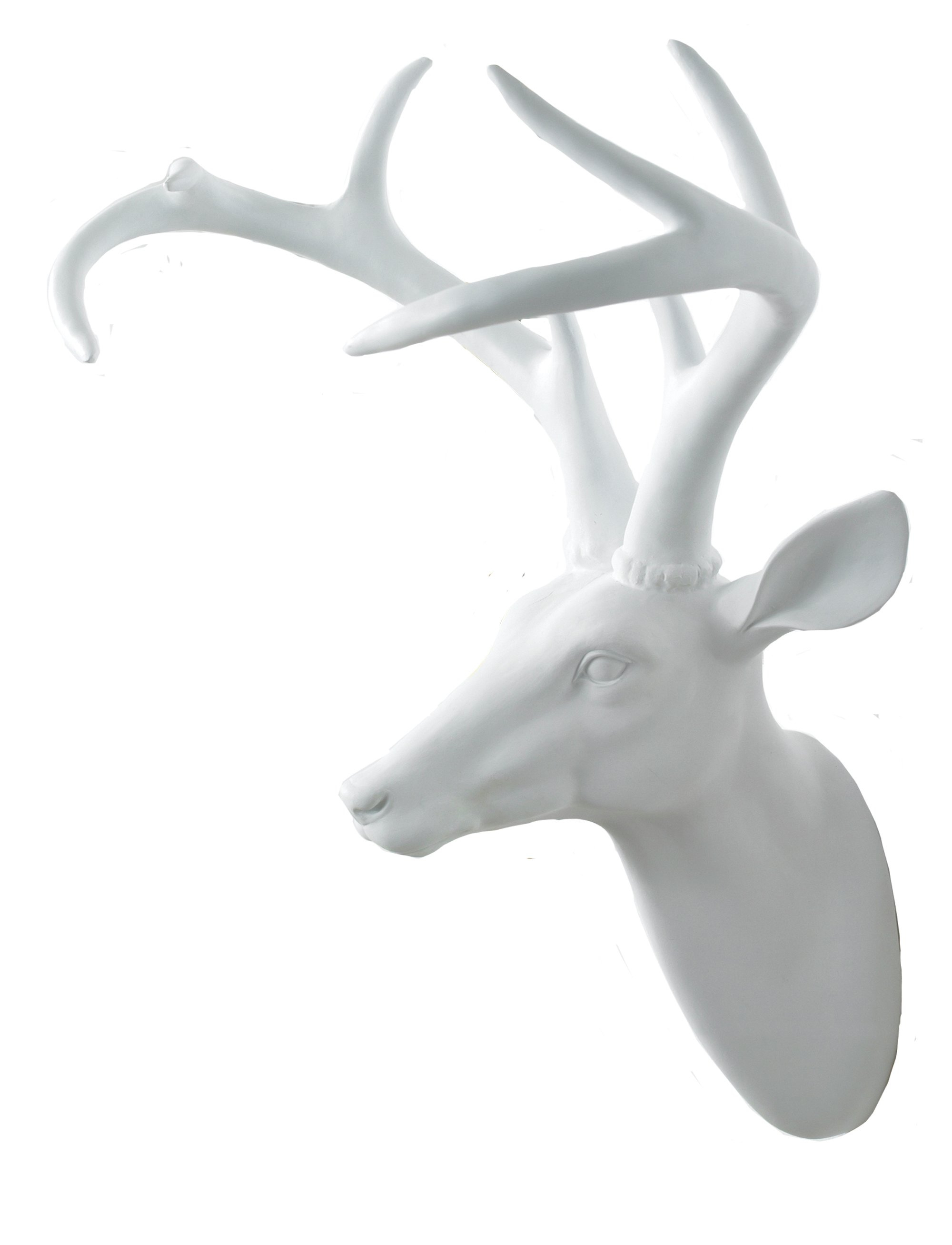Stag's Head Wall Décor intended for Highlands Ranch the Templeton Wall Decor (Image 29 of 30)