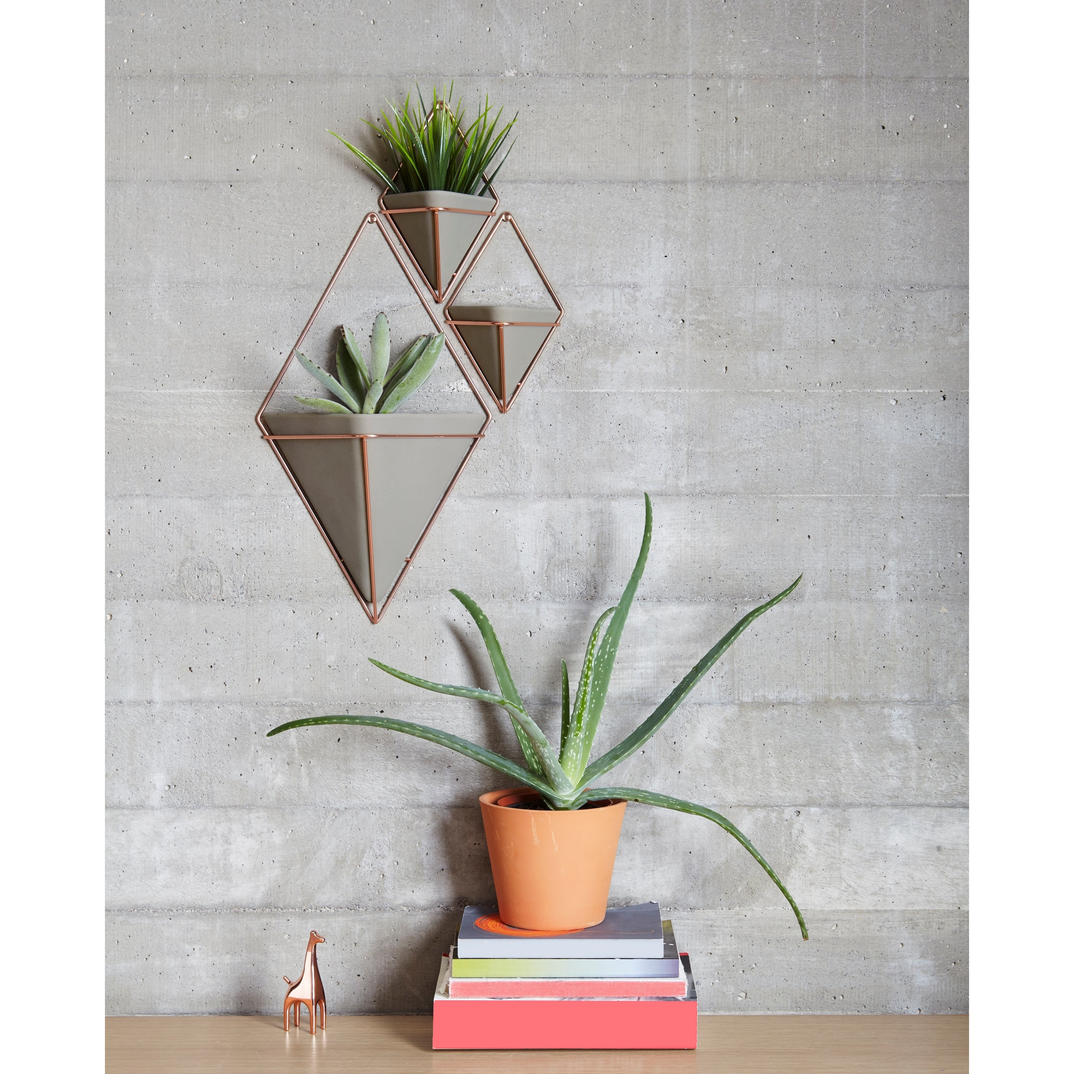 Umbra Trigg Hanging Planter & Wall Decor (Set Of 2) intended for 2 Piece Trigg Wall Decor Sets (Set of 2) (Image 21 of 30)